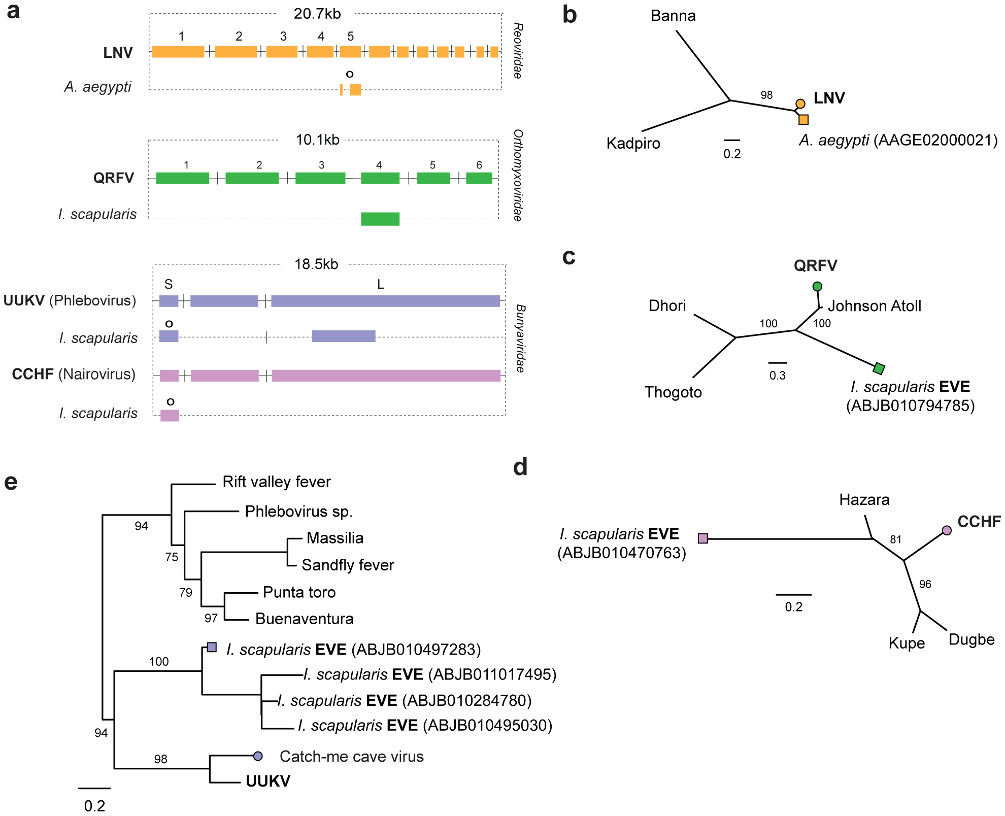 Genetic structures and phylogenetic relationships of EVEs related to segmented RNA viruses.