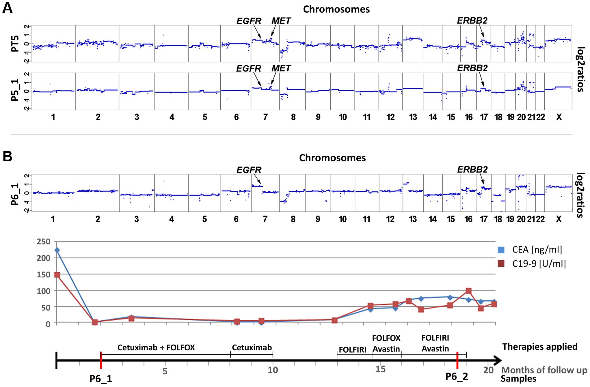 Cases with copy number changes in <i>EGFR</i>, <i>MET</i>, and <i>ERBB2</i>.