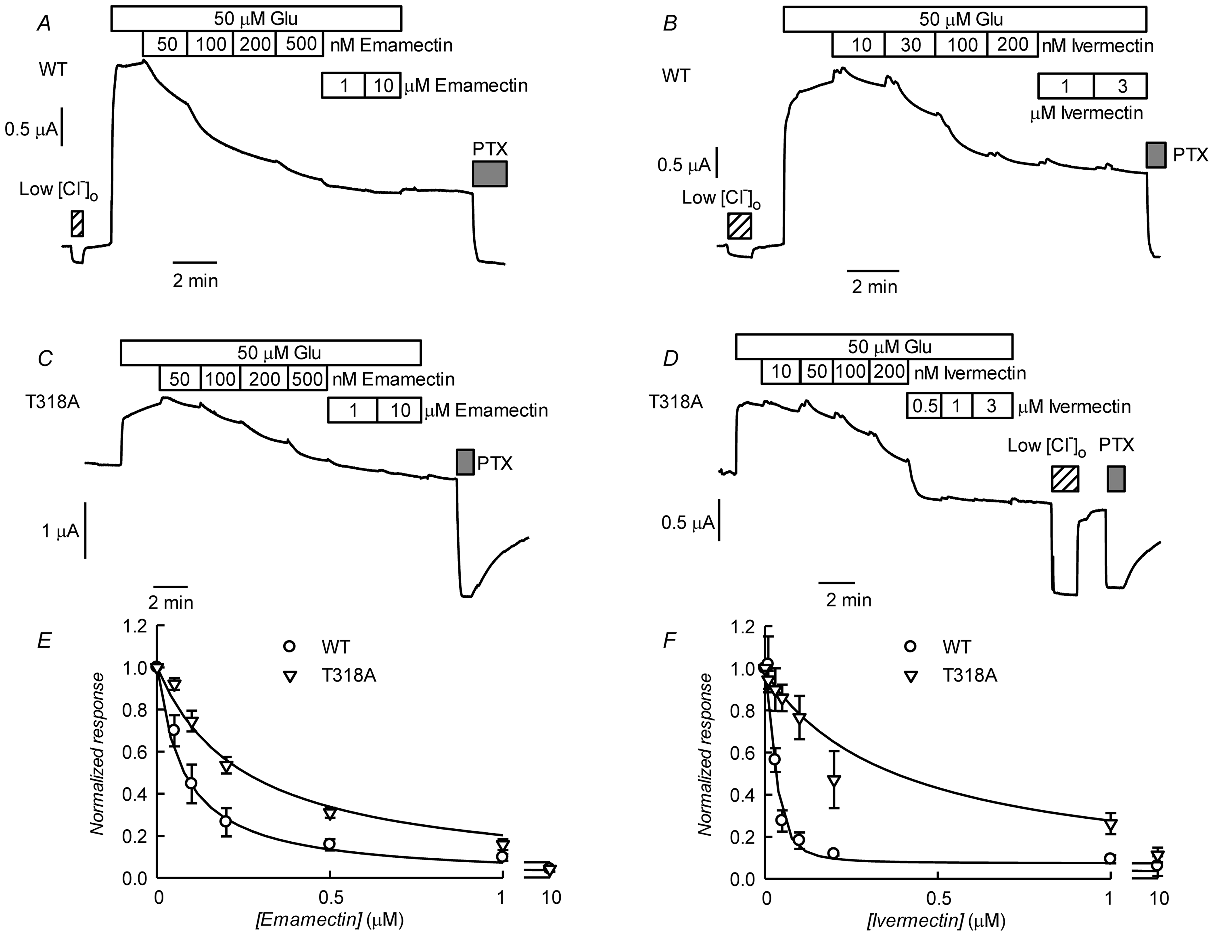 Effect of ivermectin or emamectin upon CrGluClα-T318A-dependent currents.