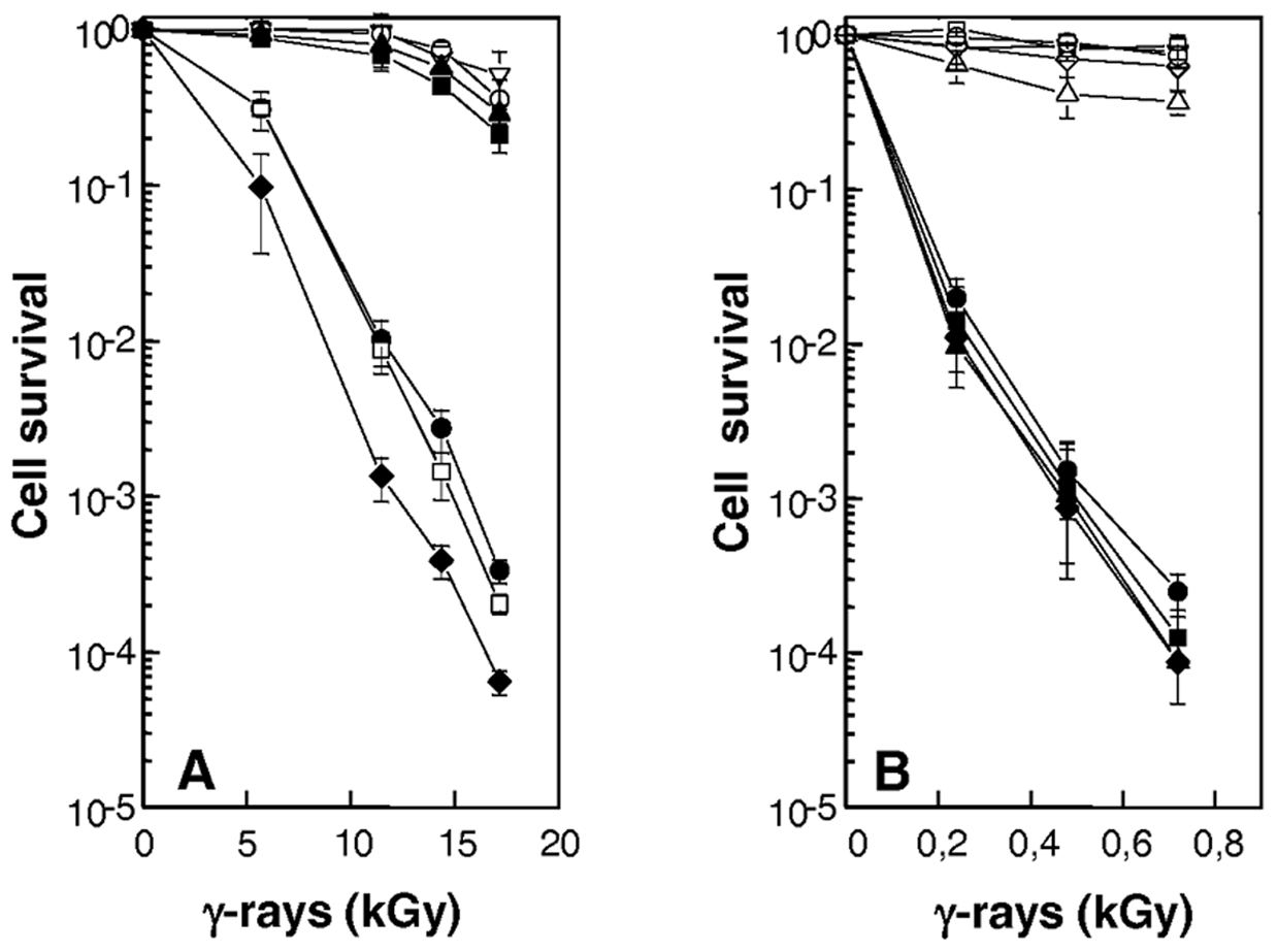 Increased sensitivity to γ-irradiation of cells devoid of RecF, RecO, RecR, or UvrD.