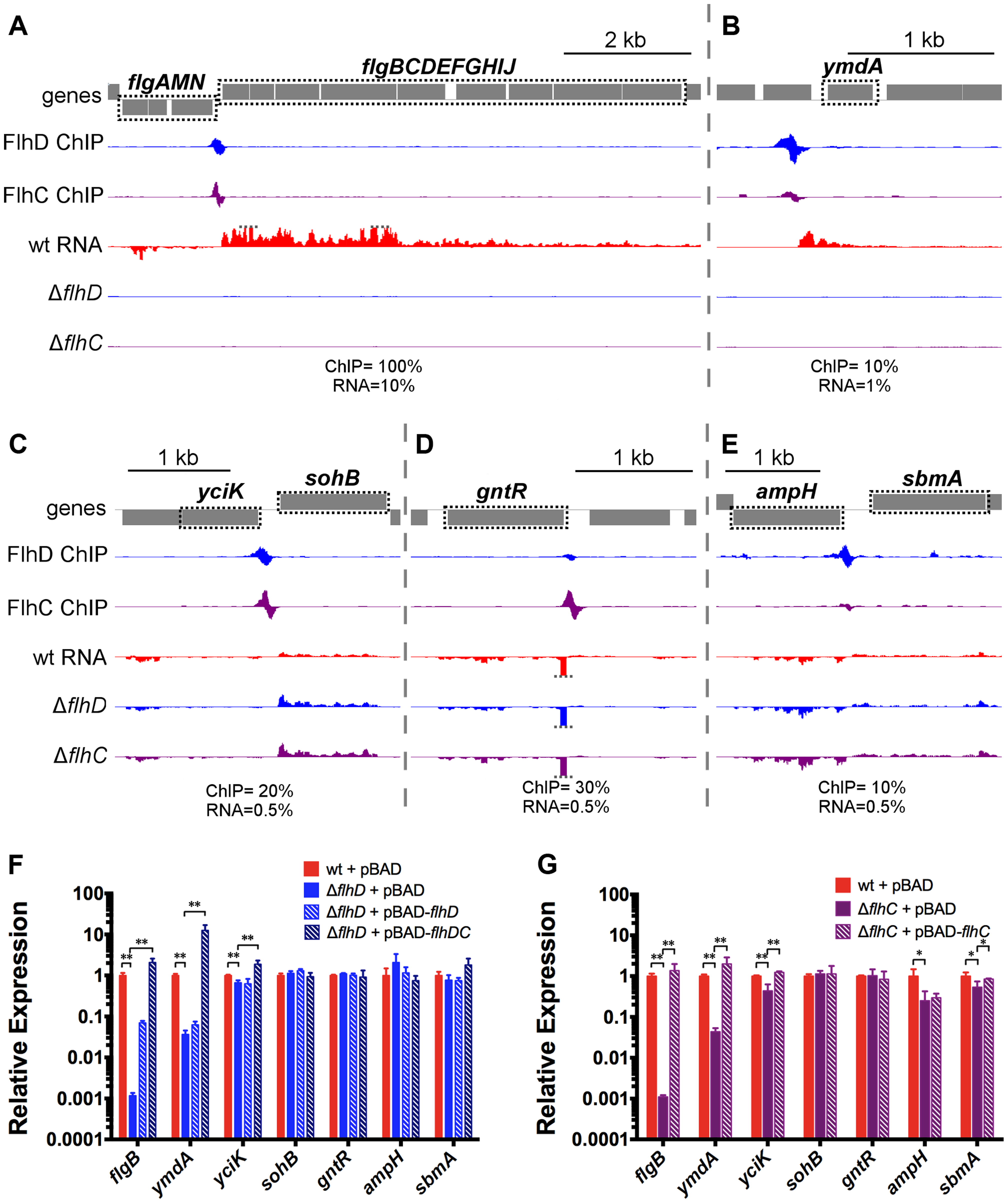 FhDC binding and regulation at known and novel targets.