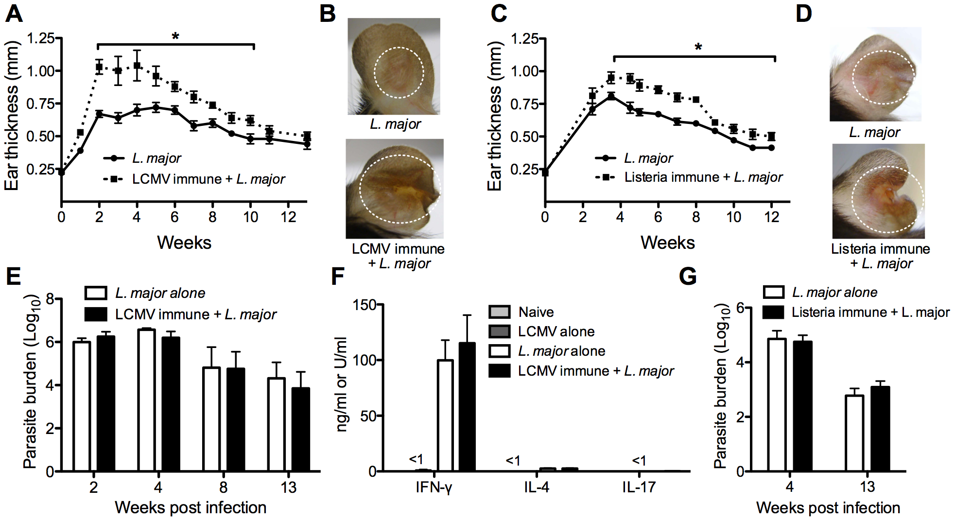 Previous heterologous infection increases leishmanial lesion size with no effect on parasite control.