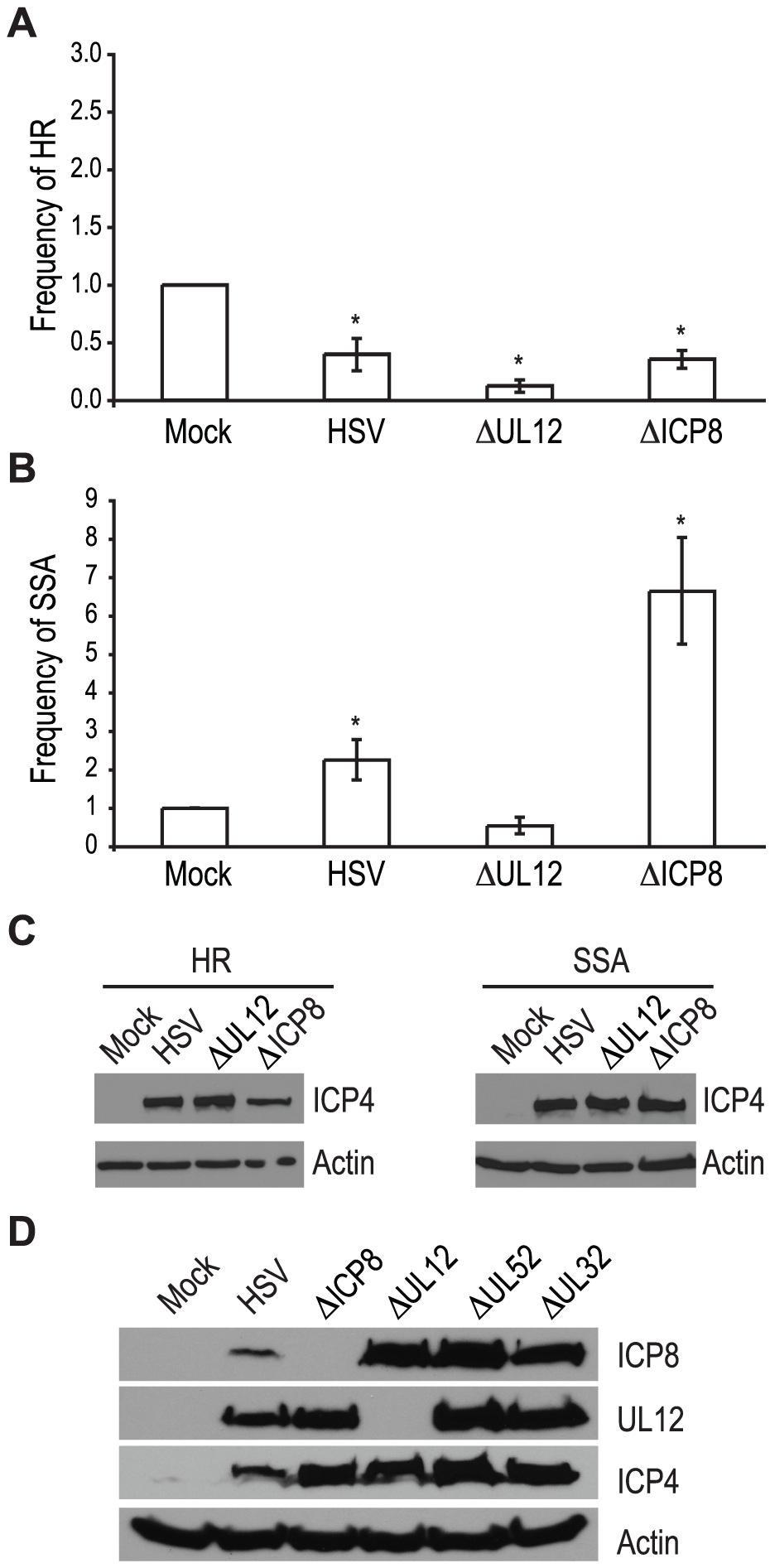 UL12 but not ICP8 is necessary to increase single strand annealing during HSV infection.