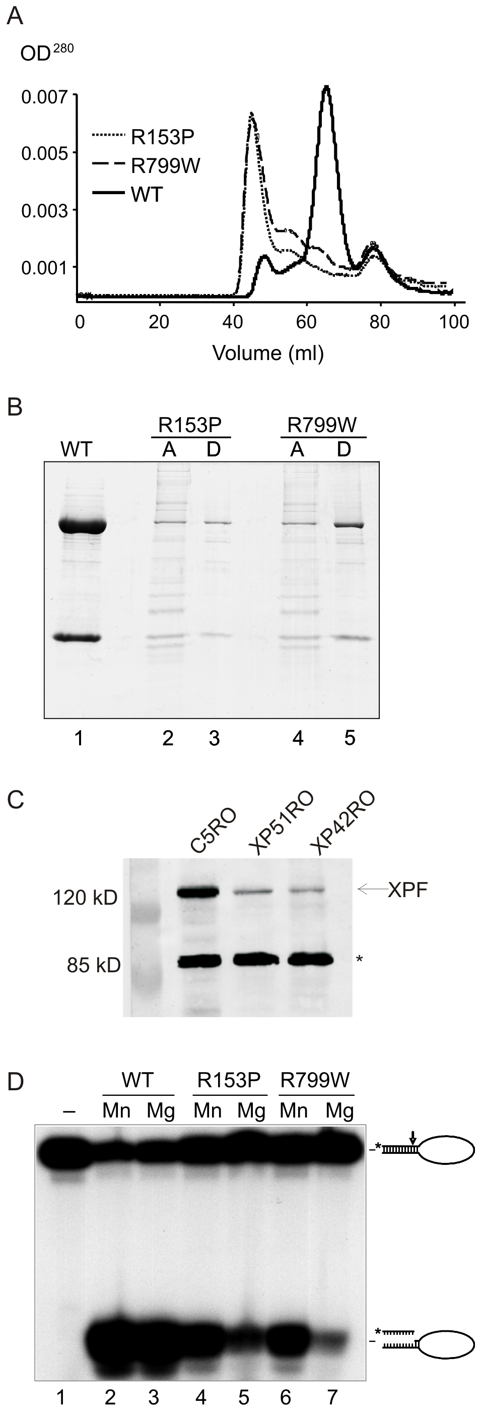 Biochemical characterization of XPF<sup>R153P</sup>-ERCC1 and XPF<sup>R799W</sup>-ERCC1 mutants.