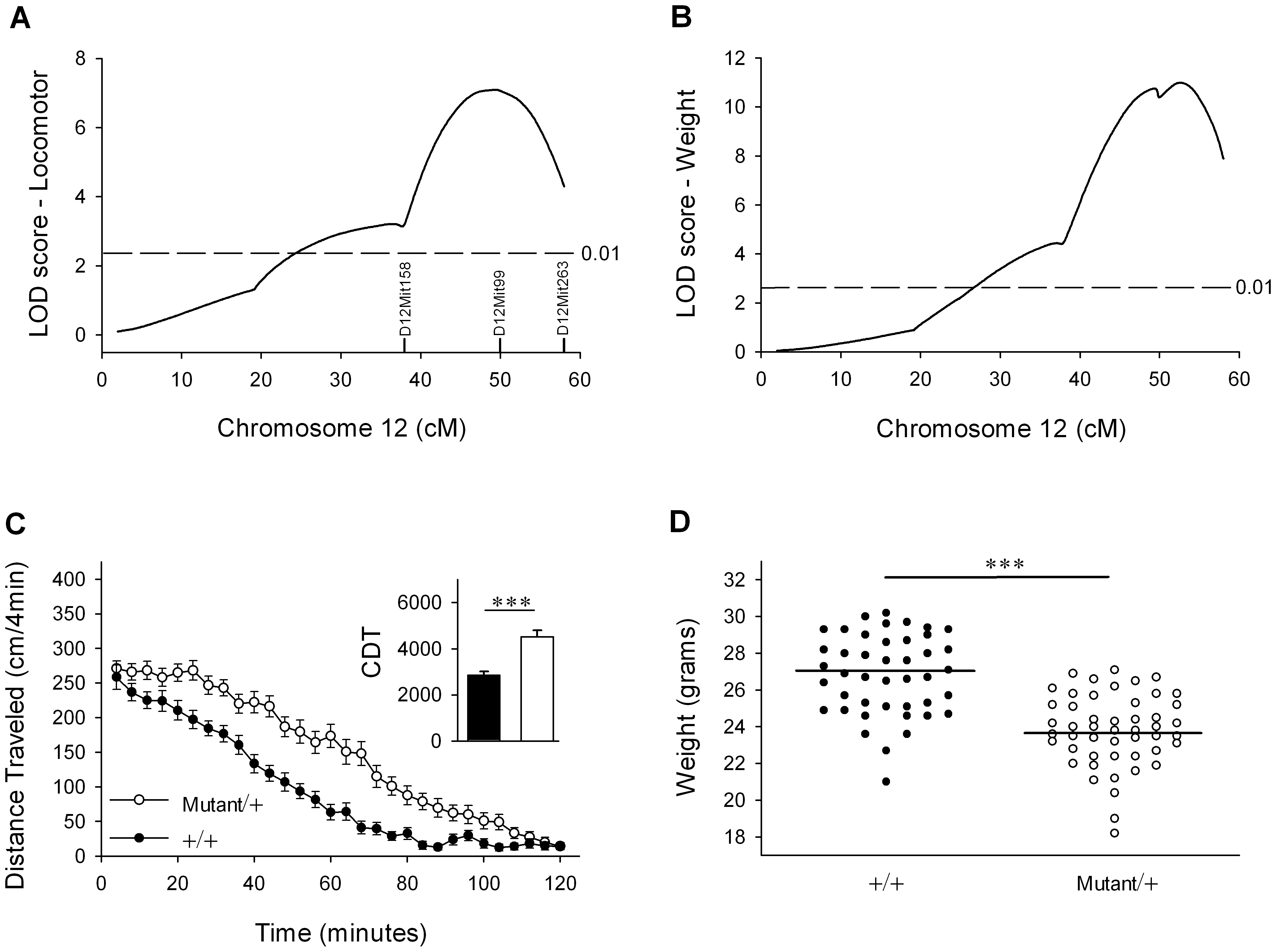 An ENU-induced QTL for locomotor activity and body weight maps to distal mouse chromosome 12.