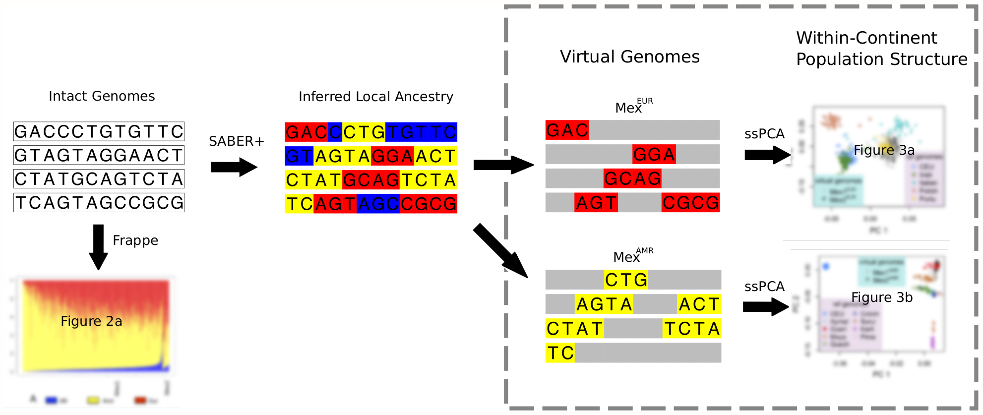 Schematic describing the analytic framework for characterizing continental-level and within-continent populations structure in an admixed population.