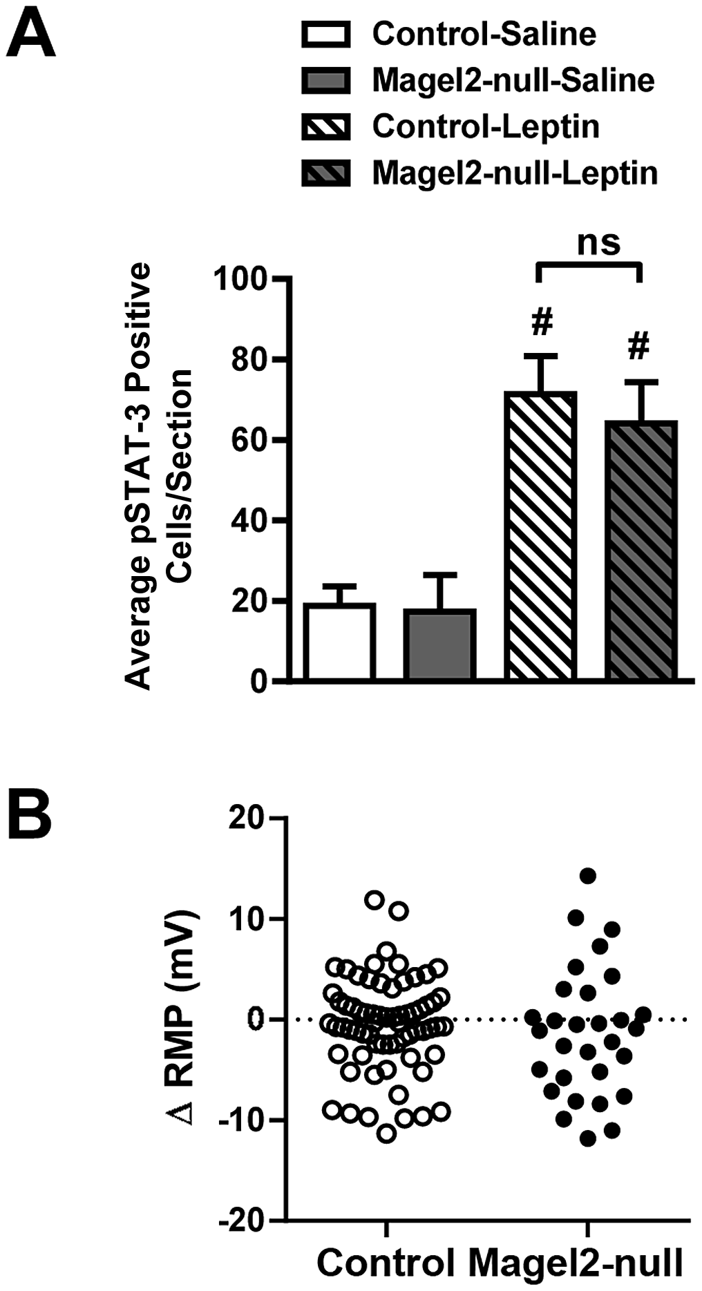 Magel2 is not required for leptin-mediated responses in the VMN.