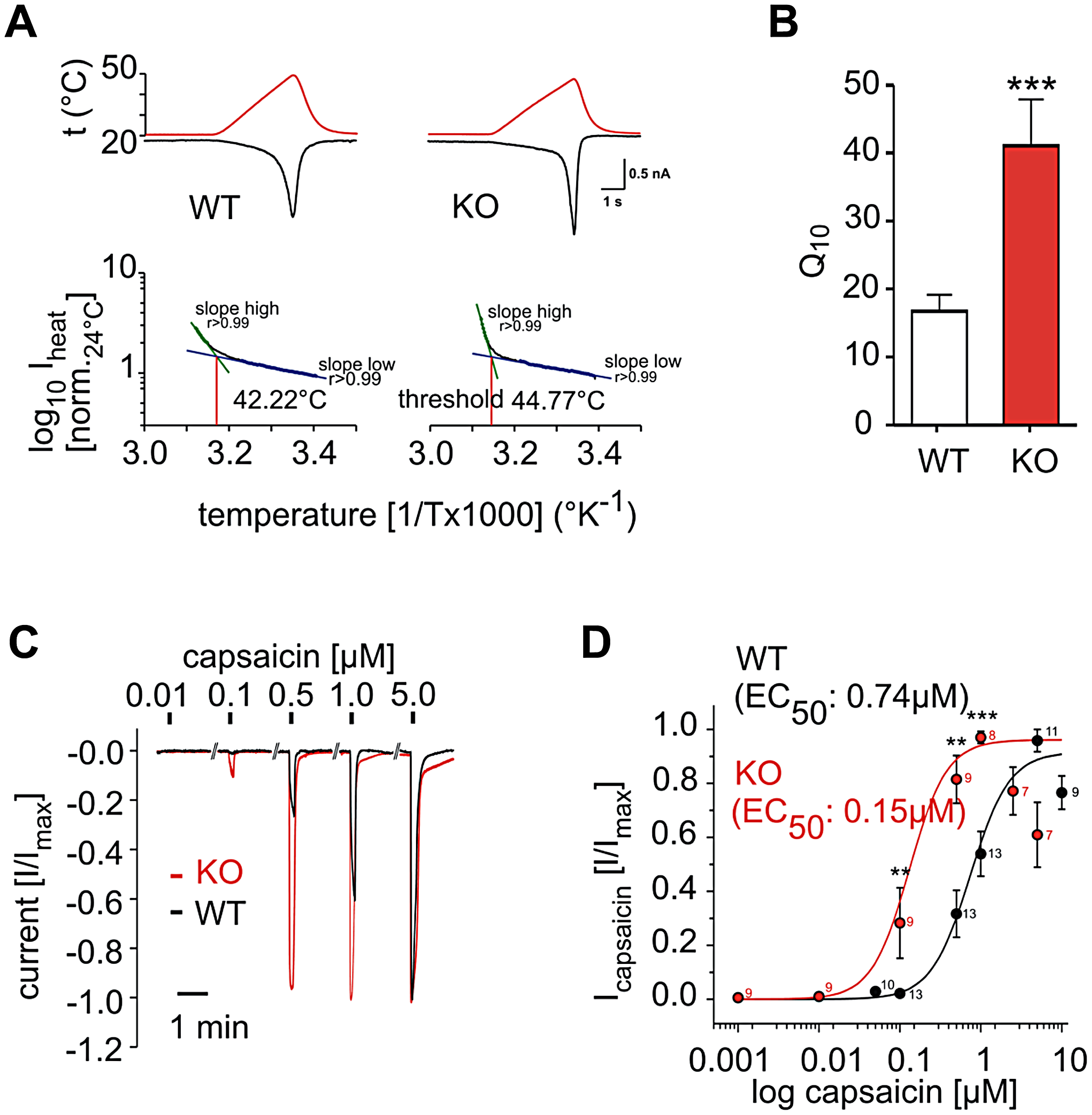 PI3Kγ acts in DRG neurons as a negative regulator of thermal and TRPV1 responses.