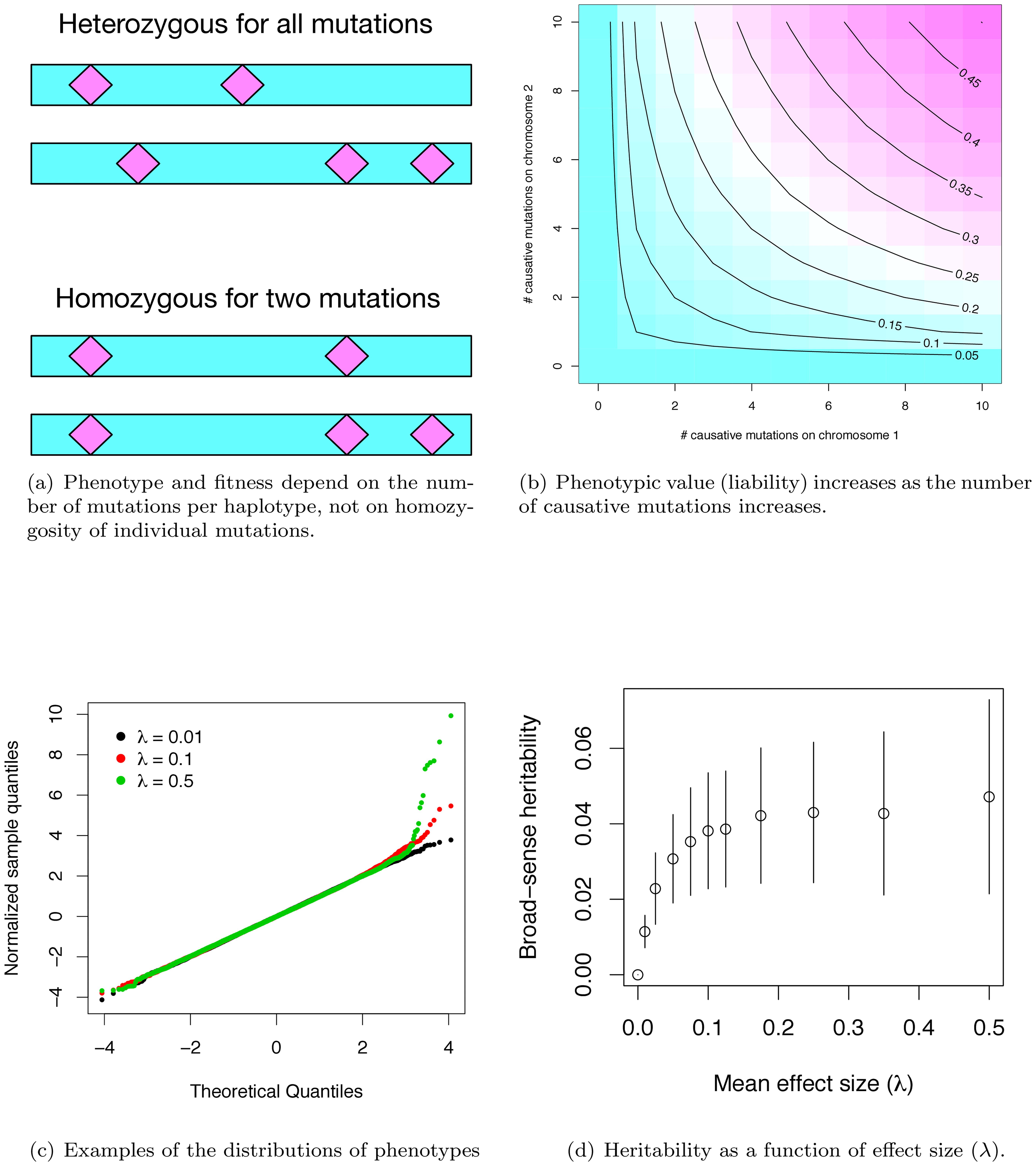 Phenotypes under the gene-based model.