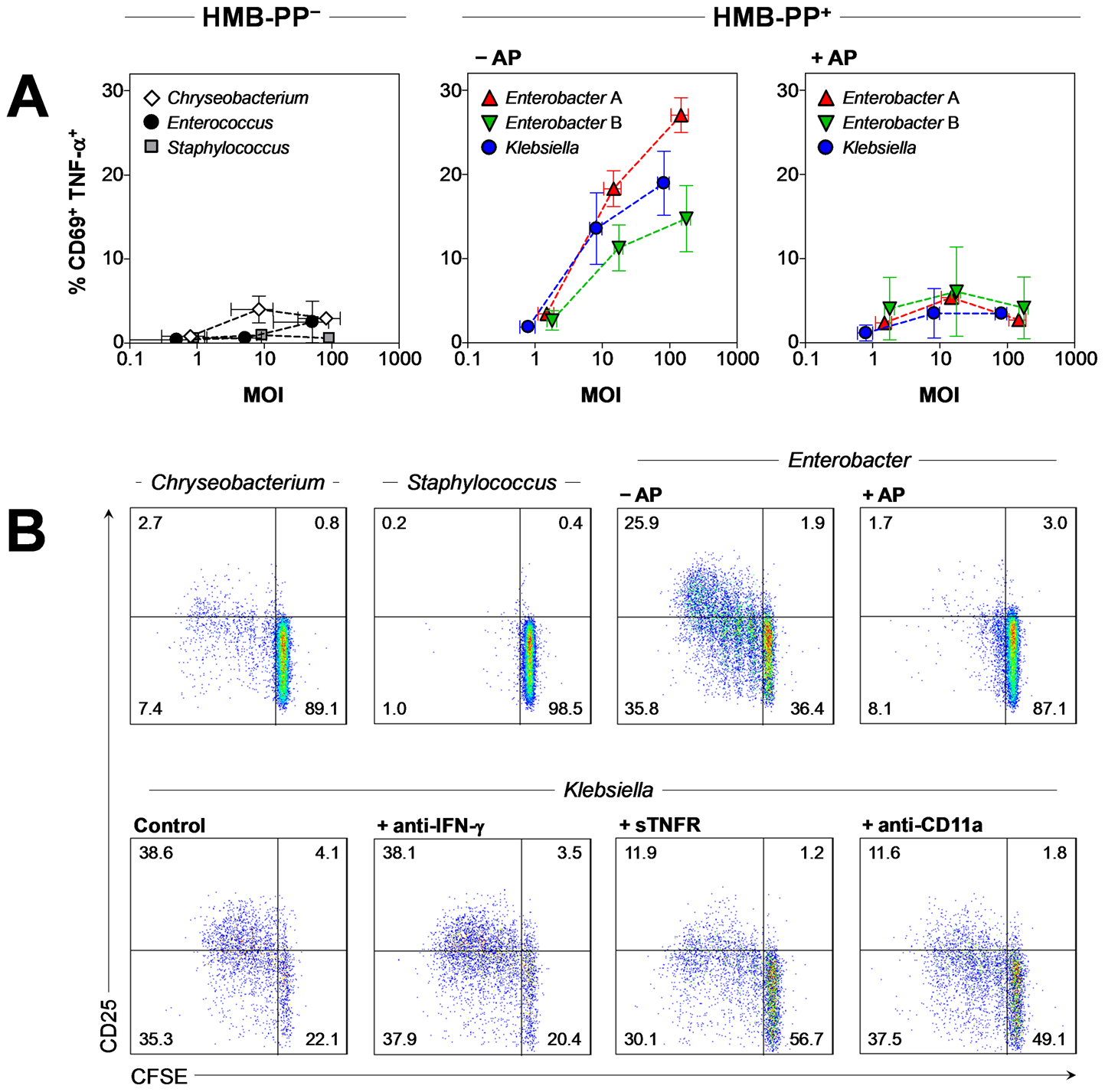 Vγ9/Vδ2 T cells respond to HMB-PP producing Gram<sup><b>+</b></sup> and Gram<sup><b>−</b></sup> bacteria but not to HMB-PP deficient bacteria.