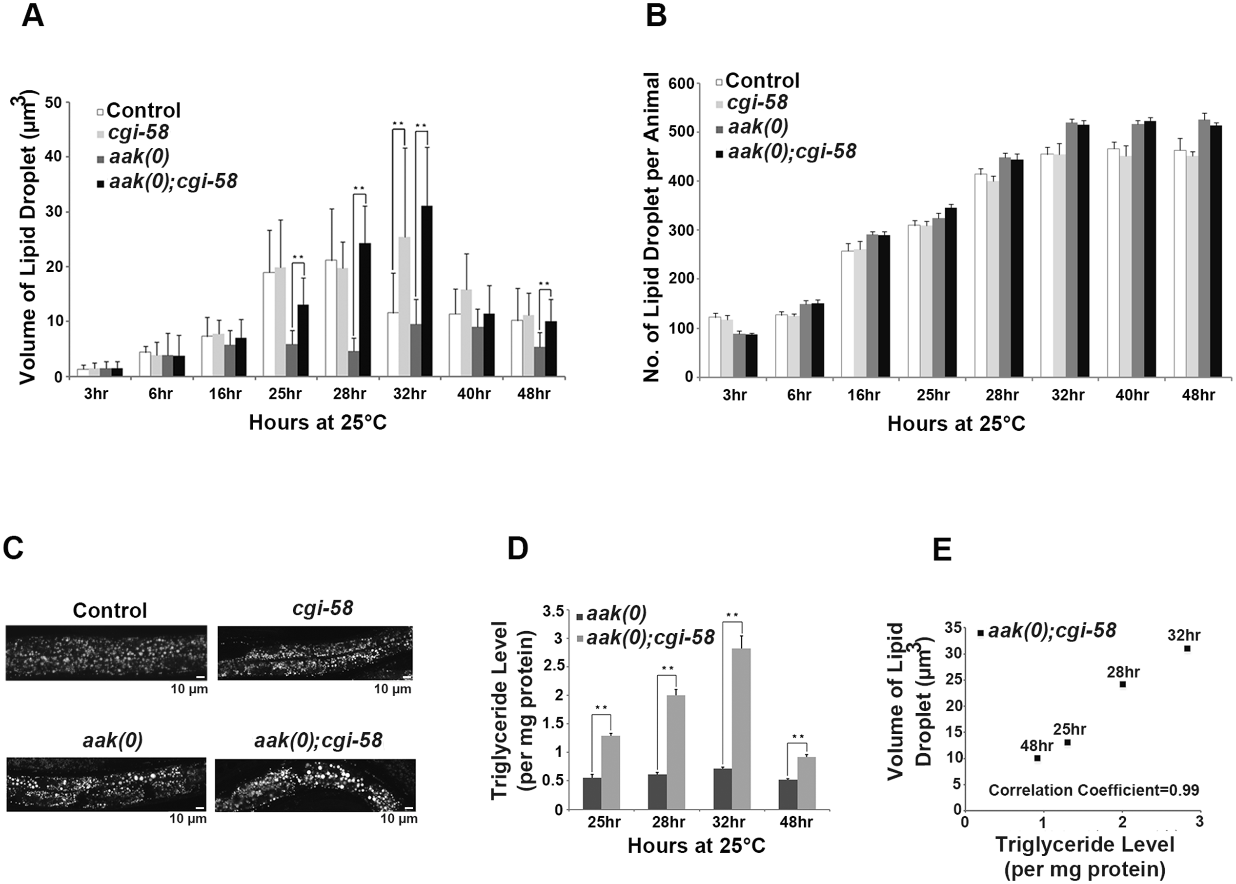 CGI-58 is essential for lipid droplet size regulation.