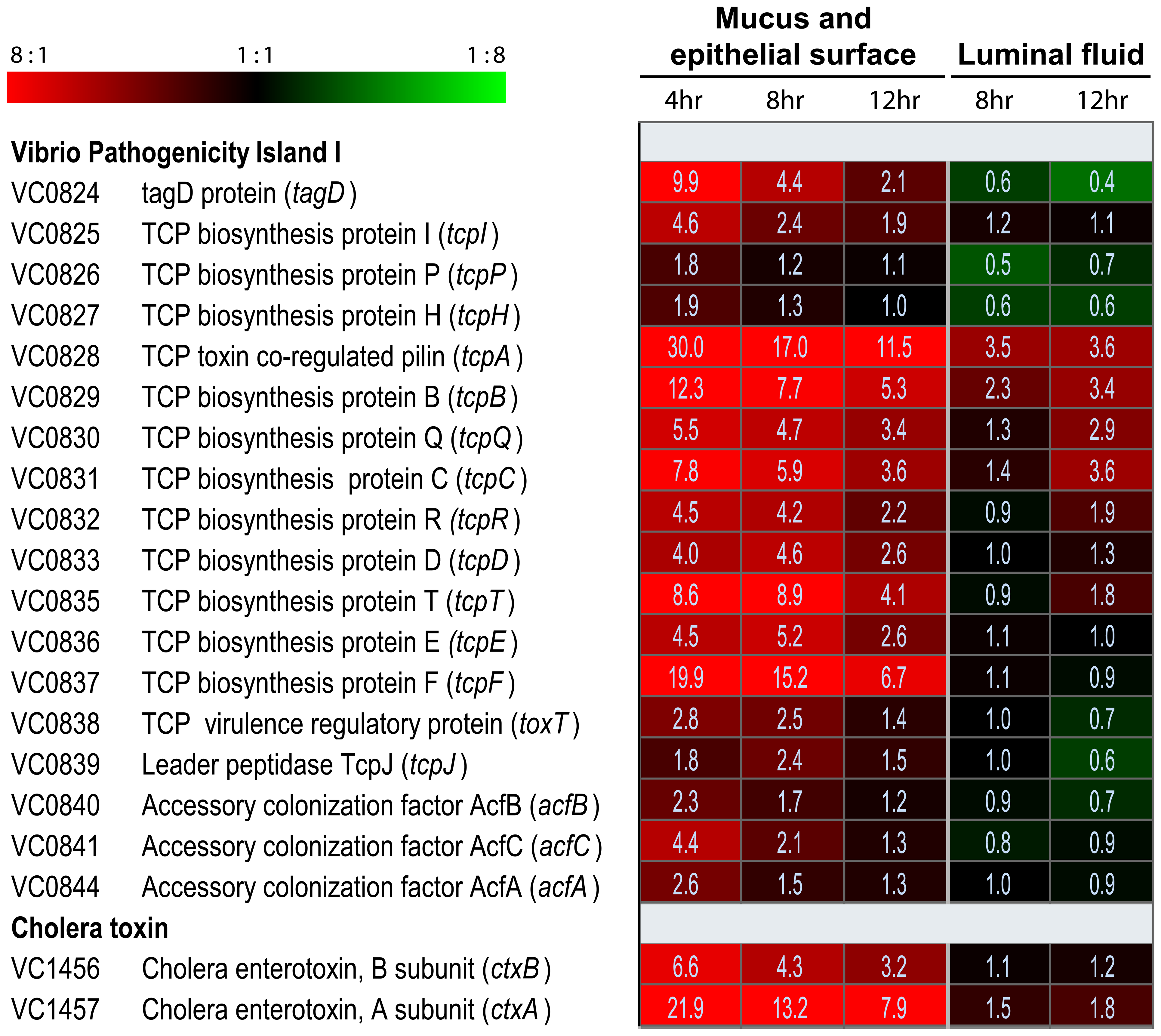 Compartment-specific expression profiling of the <i>V. cholerae</i> O1 <i>tcp</i> and <i>ctx</i> operons in ligated rabbit ileal loops.