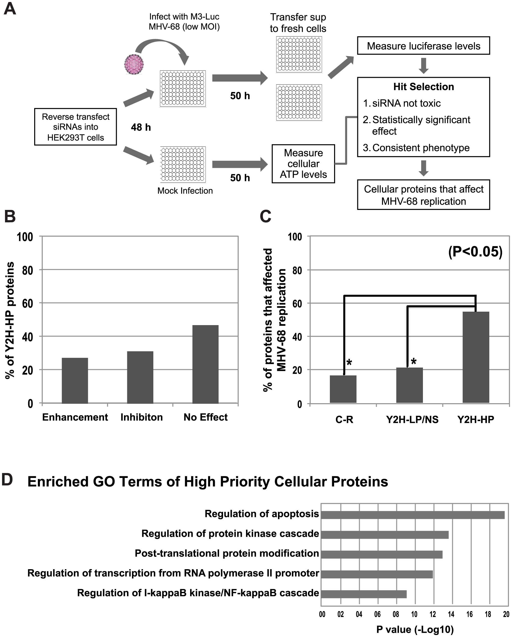Functional validation of cellular proteins from the MHV-68-cellular protein interaction network.