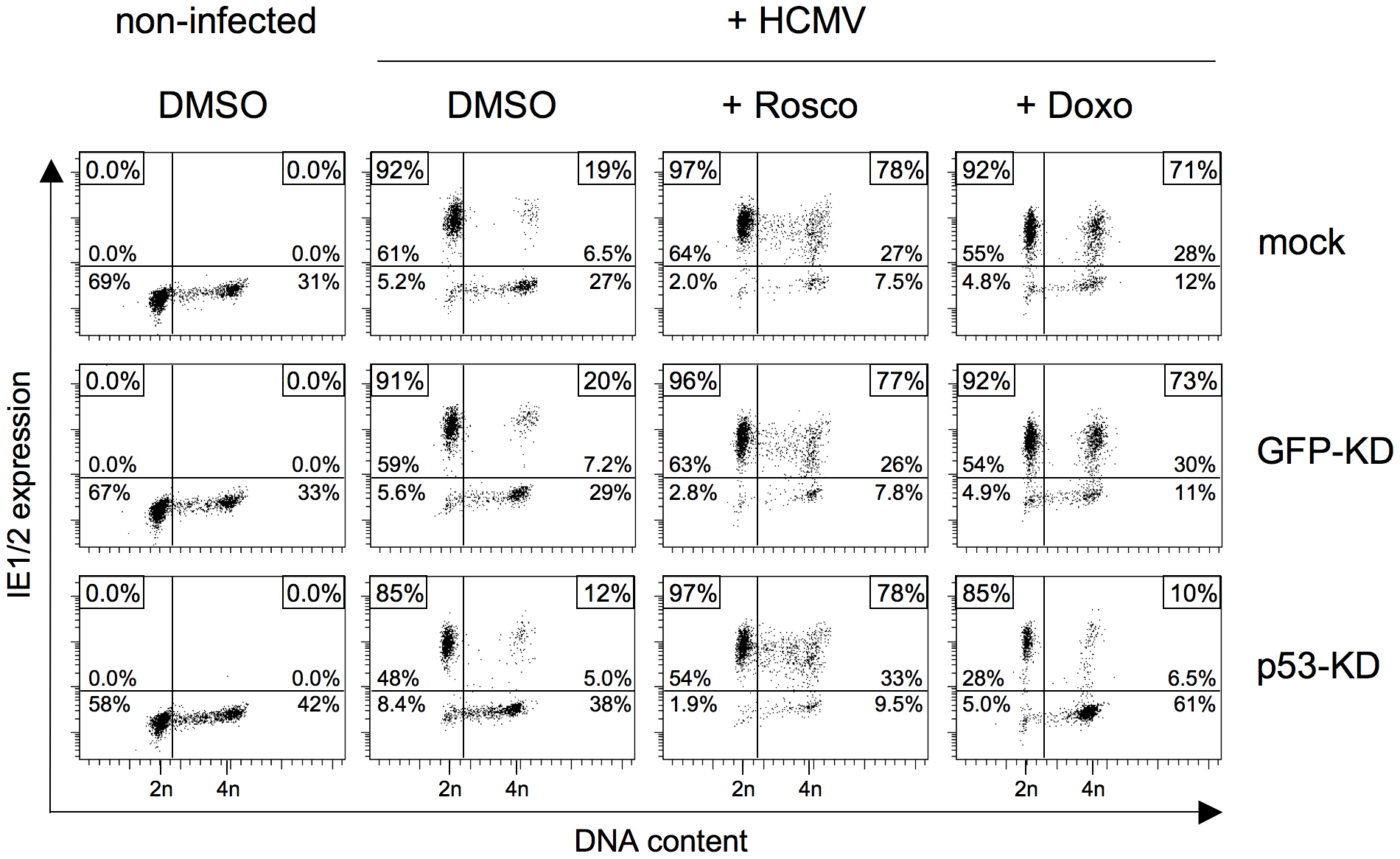 The roscovitine-mediated rescue of MIE gene expression in S/G2 cells is p53 independent.