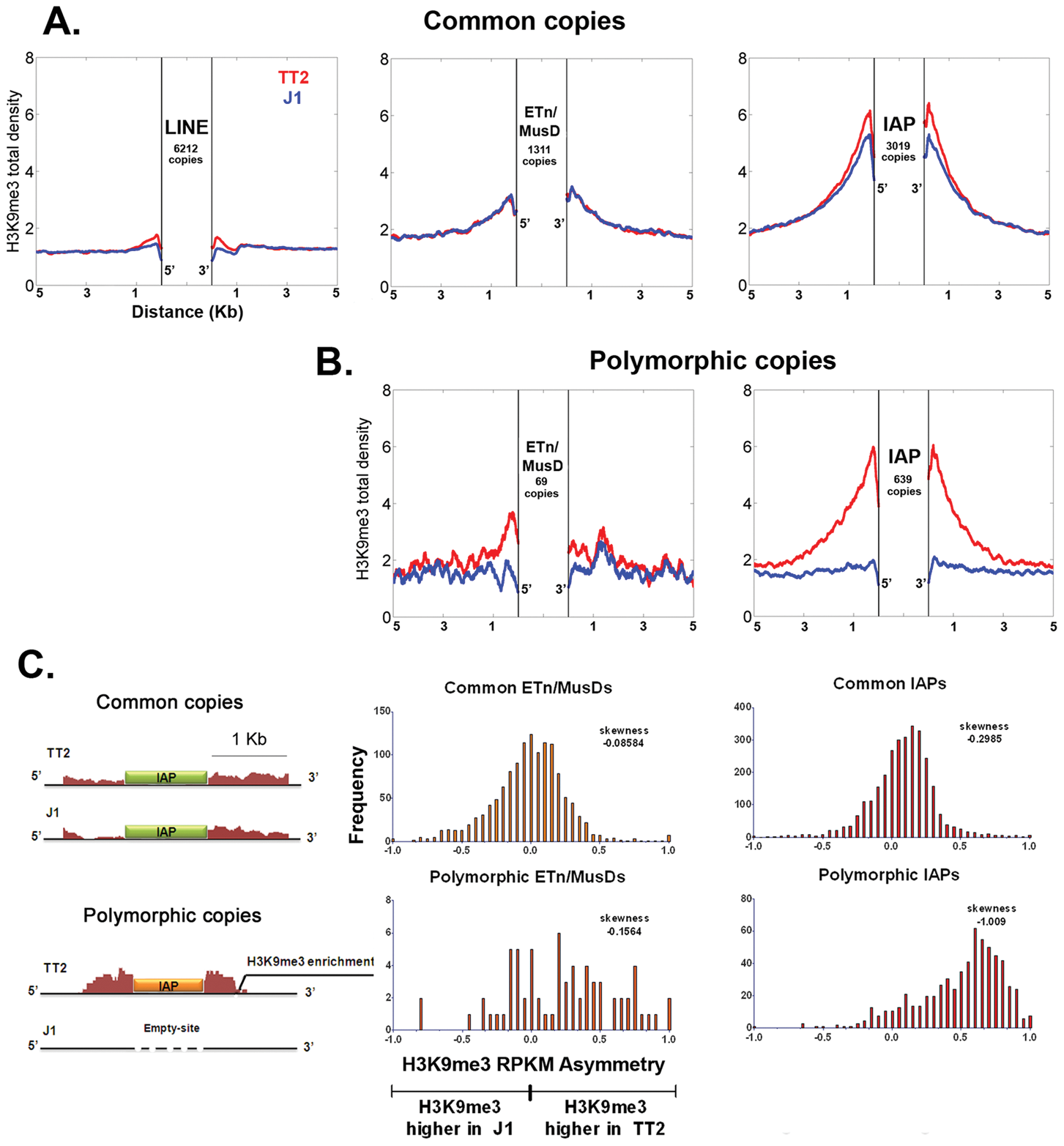 Detecting retrotransposon influence on H3K9me3 chromatin by comparison of common and insertionally polymorphic copies.