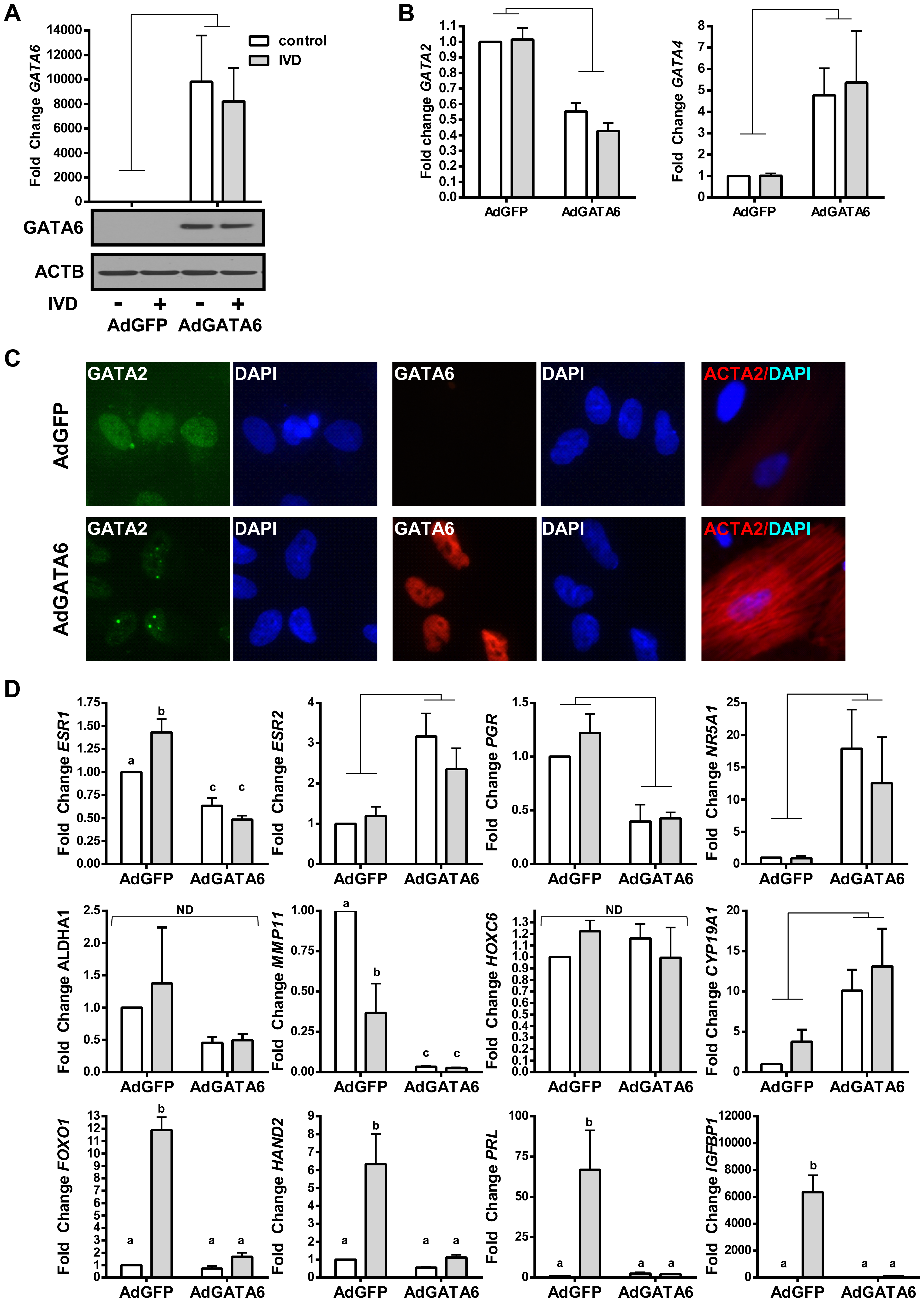 The effects of GATA6 expression in EIUM.