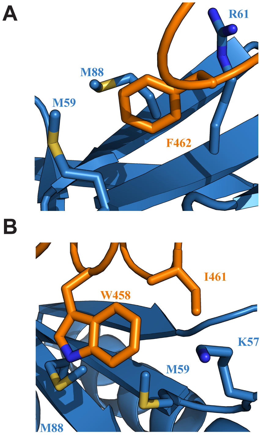Key interactions at the interface of the Tfb1PH-EBNA2<sub>448–471</sub> complex.
