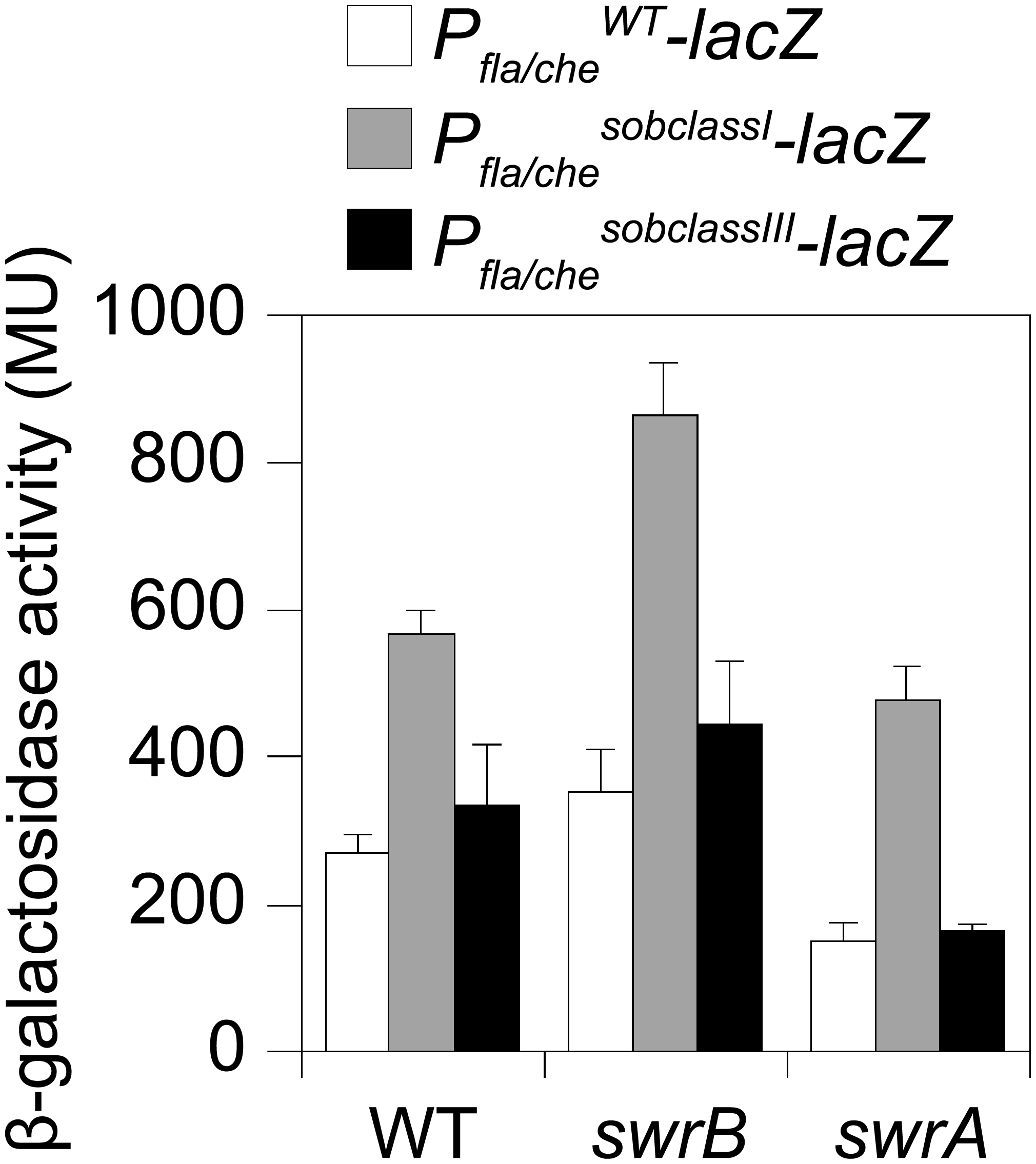 Class I but not Class III <i>sob</i> alleles in the <i>P</i><sub><i>fla/che</i></sub> promoter region increase <i>P</i><sub><i>fla/che</i></sub> expression.