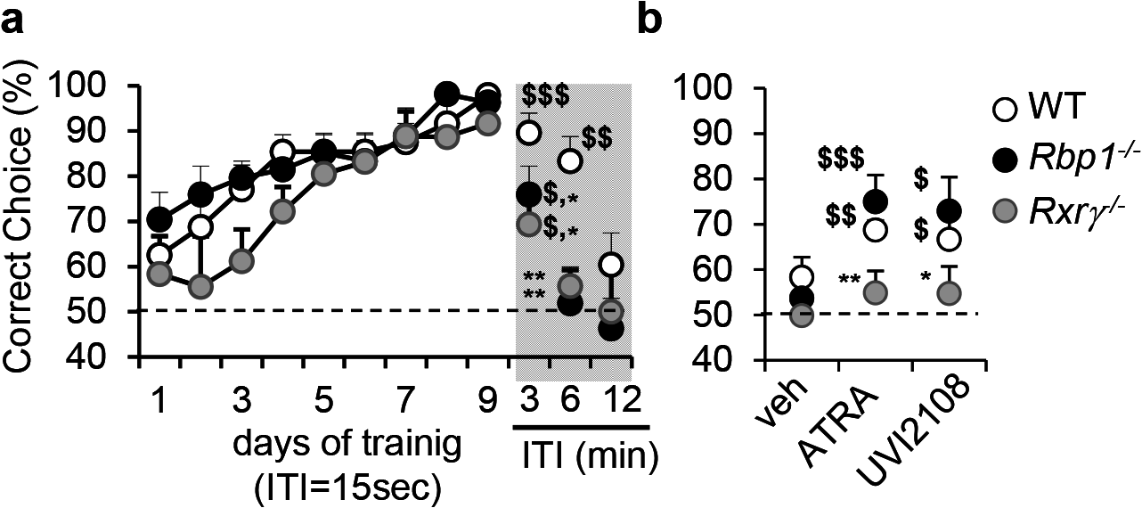 Compromised RXR signaling in <i>Rbp1</i><sup><i>-/-</i></sup> mice.