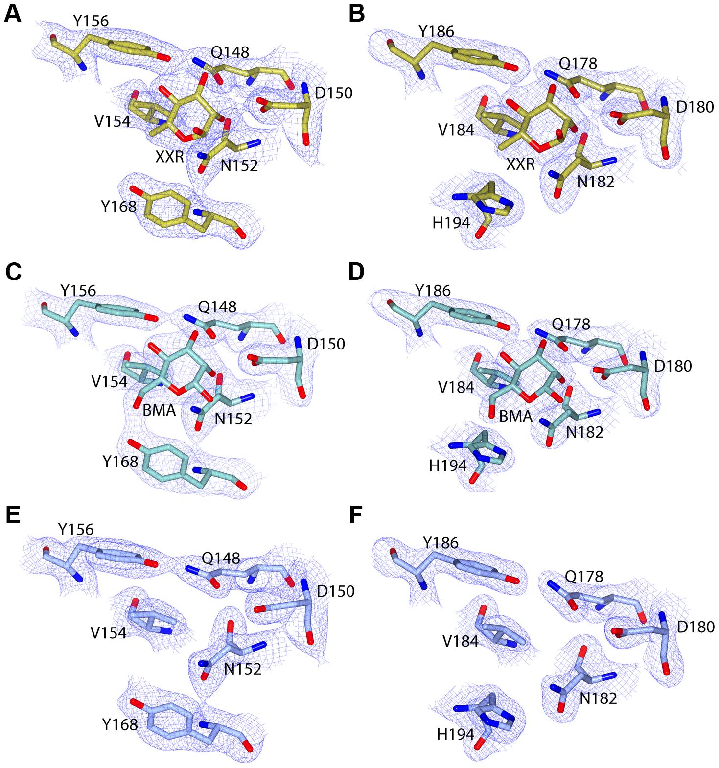 C-terminal MMBL-sugar binding motifs of pyocin L1 bind d-rhamnose and d-mannose.