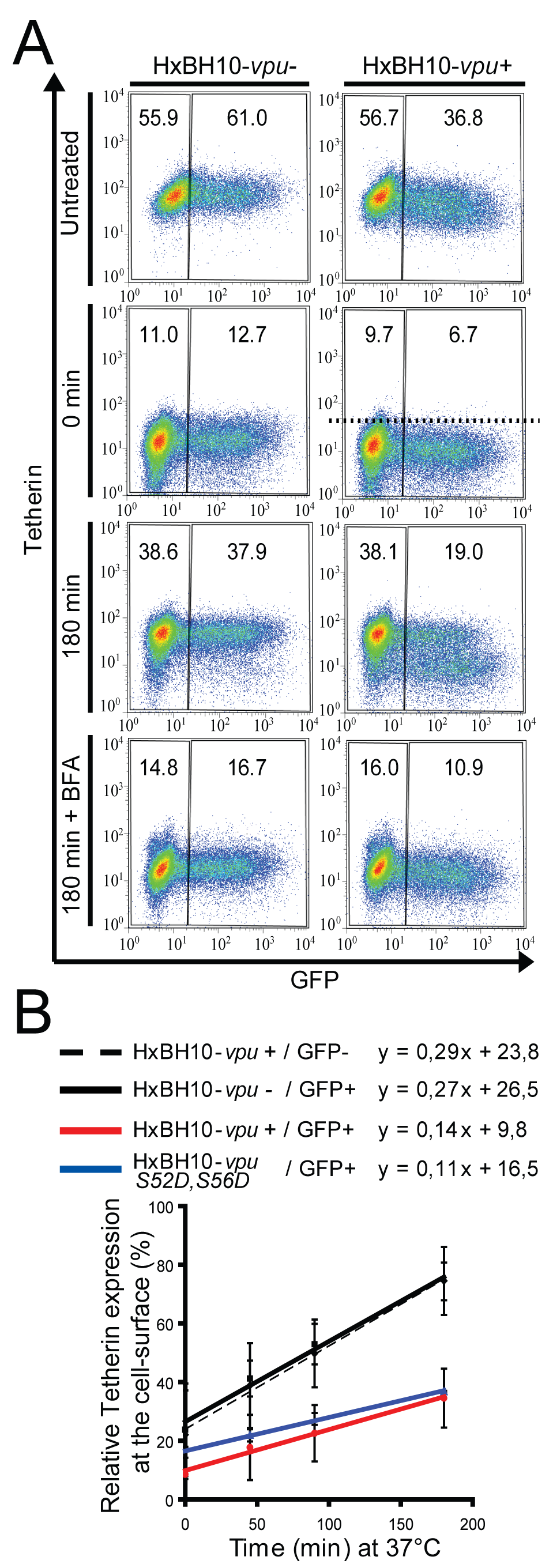 Vpu affects Tetherin trafficking to the cell surface.