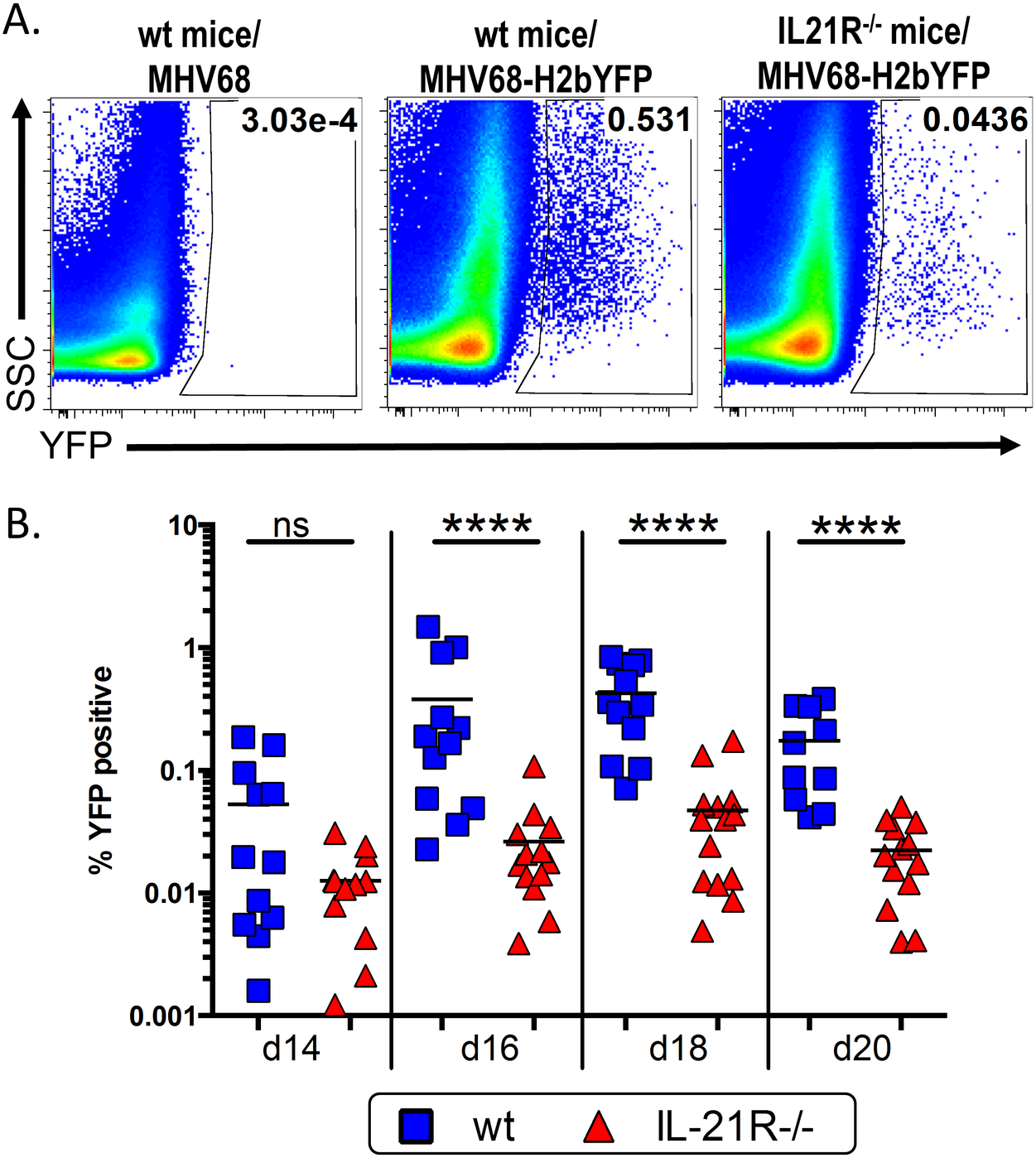 IL-21 signaling is required for efficient establishment of MHV68 latency.