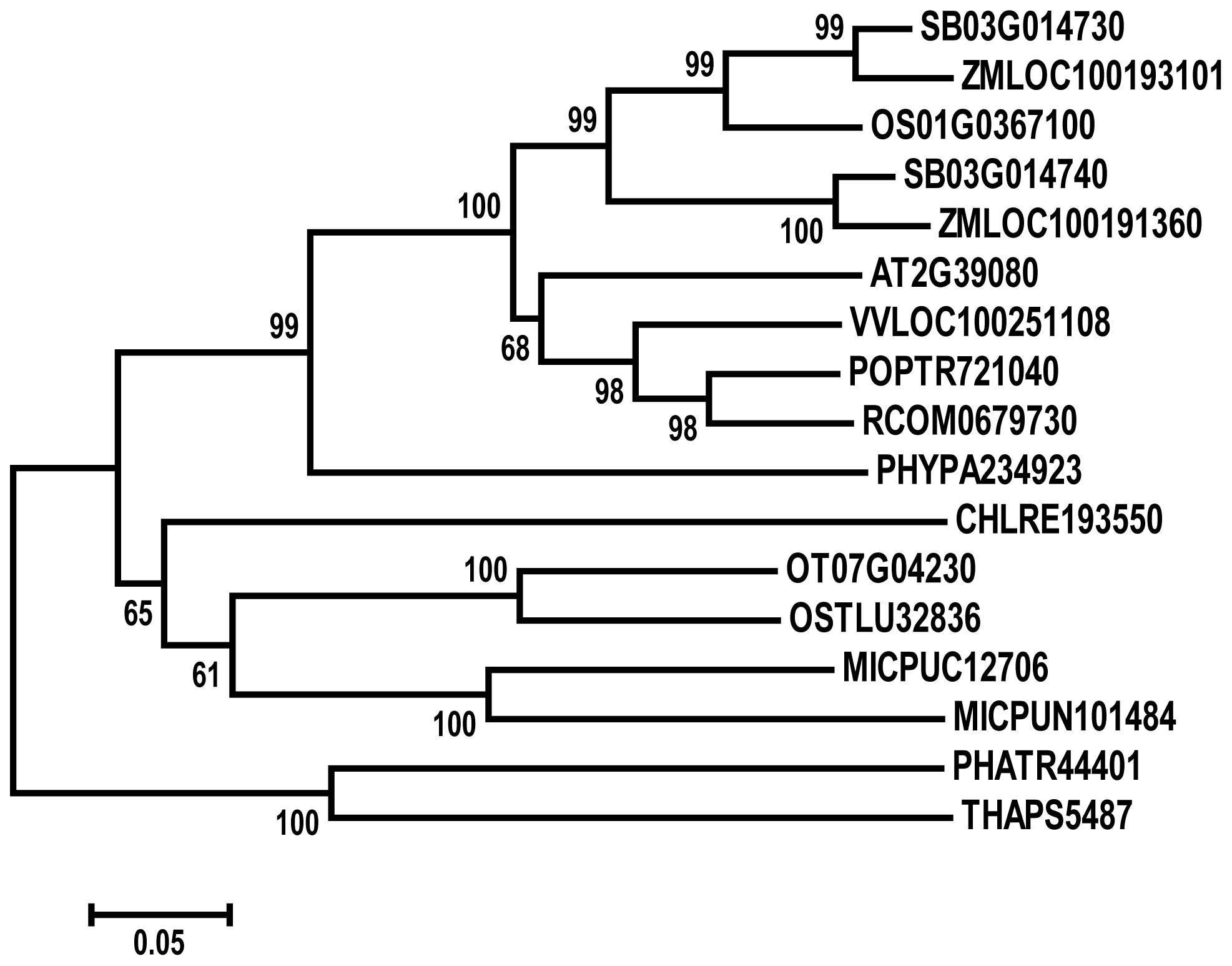 Phylogenetic analysis of PHD1.