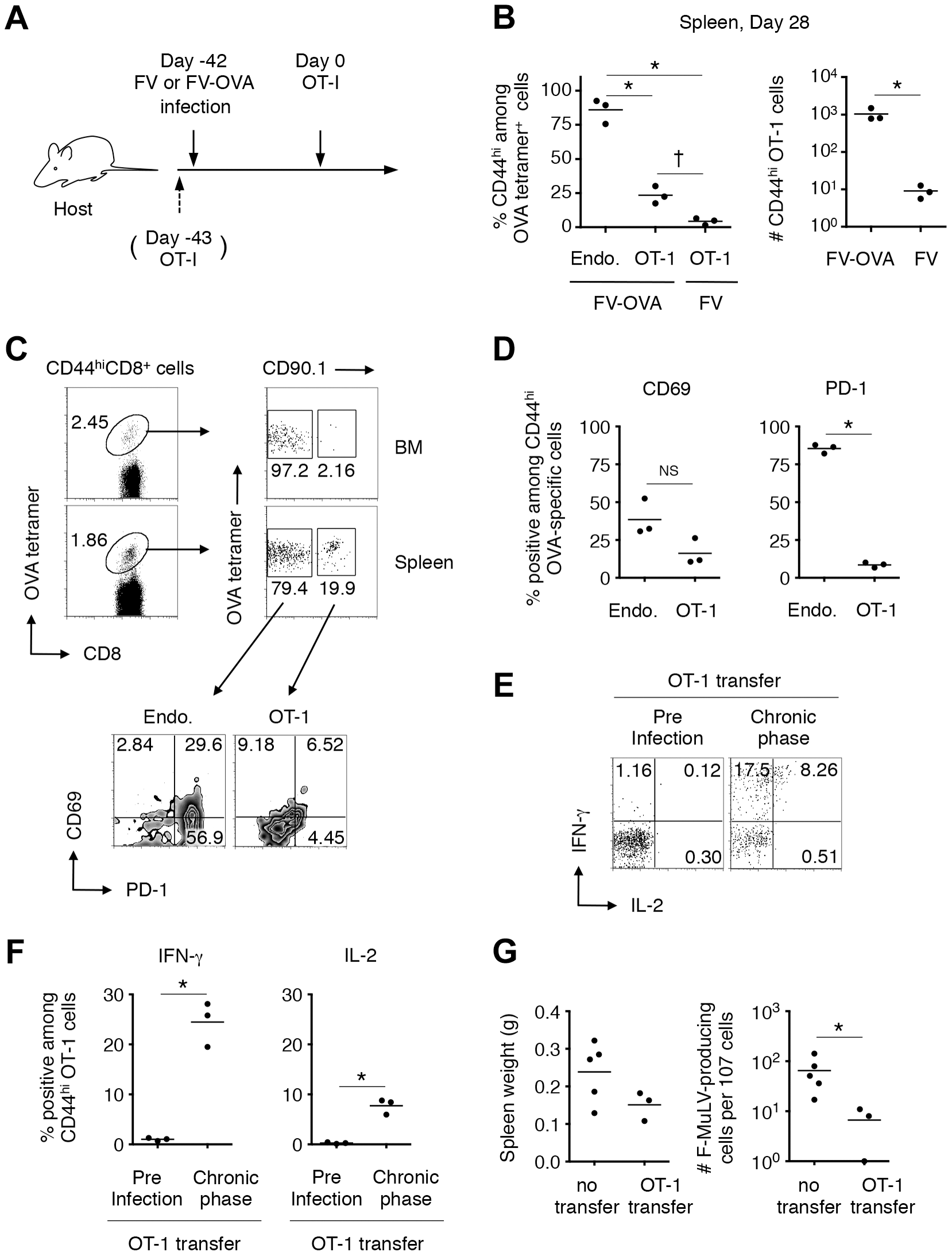 FV-specific CD8<sup>+</sup> T cells can differentiate into functional memory CD8<sup>+</sup> T cells if recruited during the chronic phase of infection.