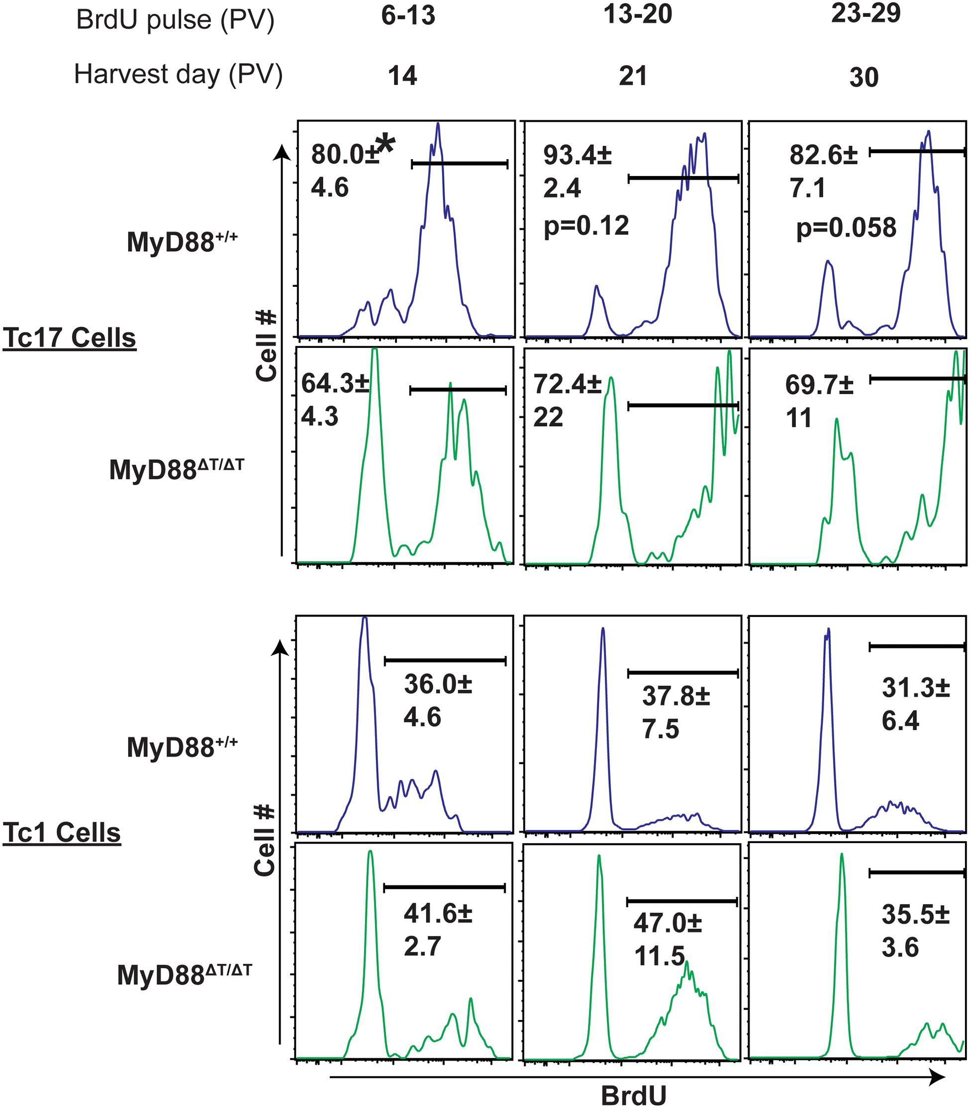 MyD88 signaling potentiates proliferation of Tc17 cells.