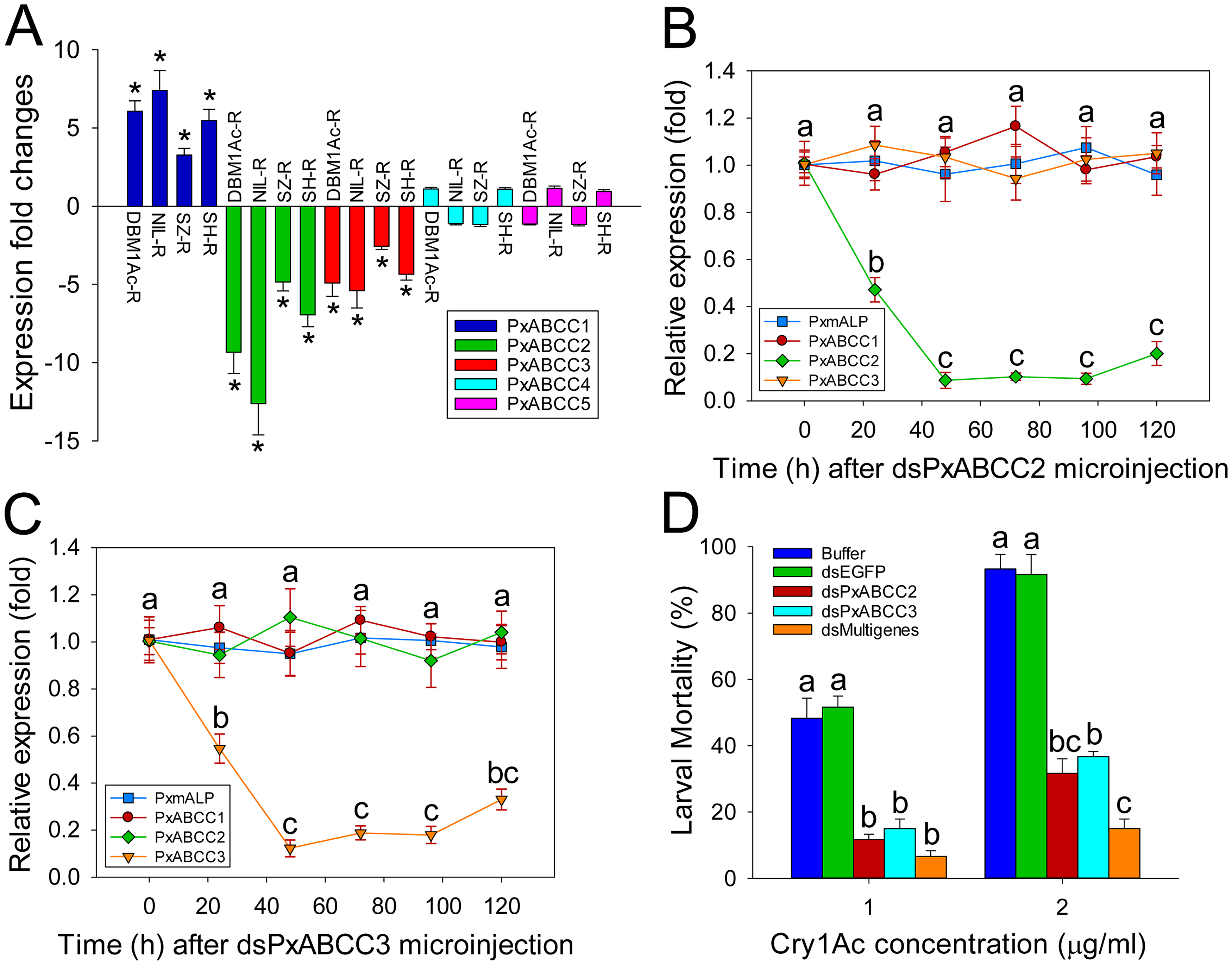 Functional analysis of <i>PxABCC</i> genes in the <i>BtR-1</i> resistance locus.