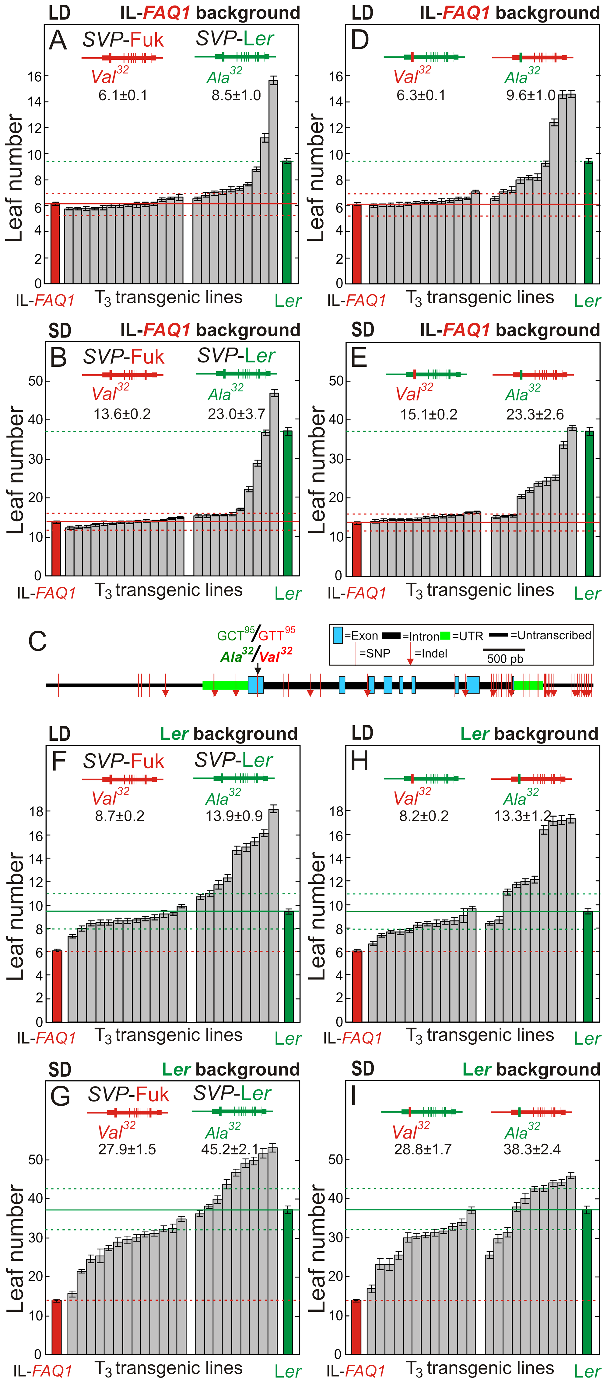 Flowering phenotypes of transgenic lines for parental and chimerical <i>SVP</i> alleles.