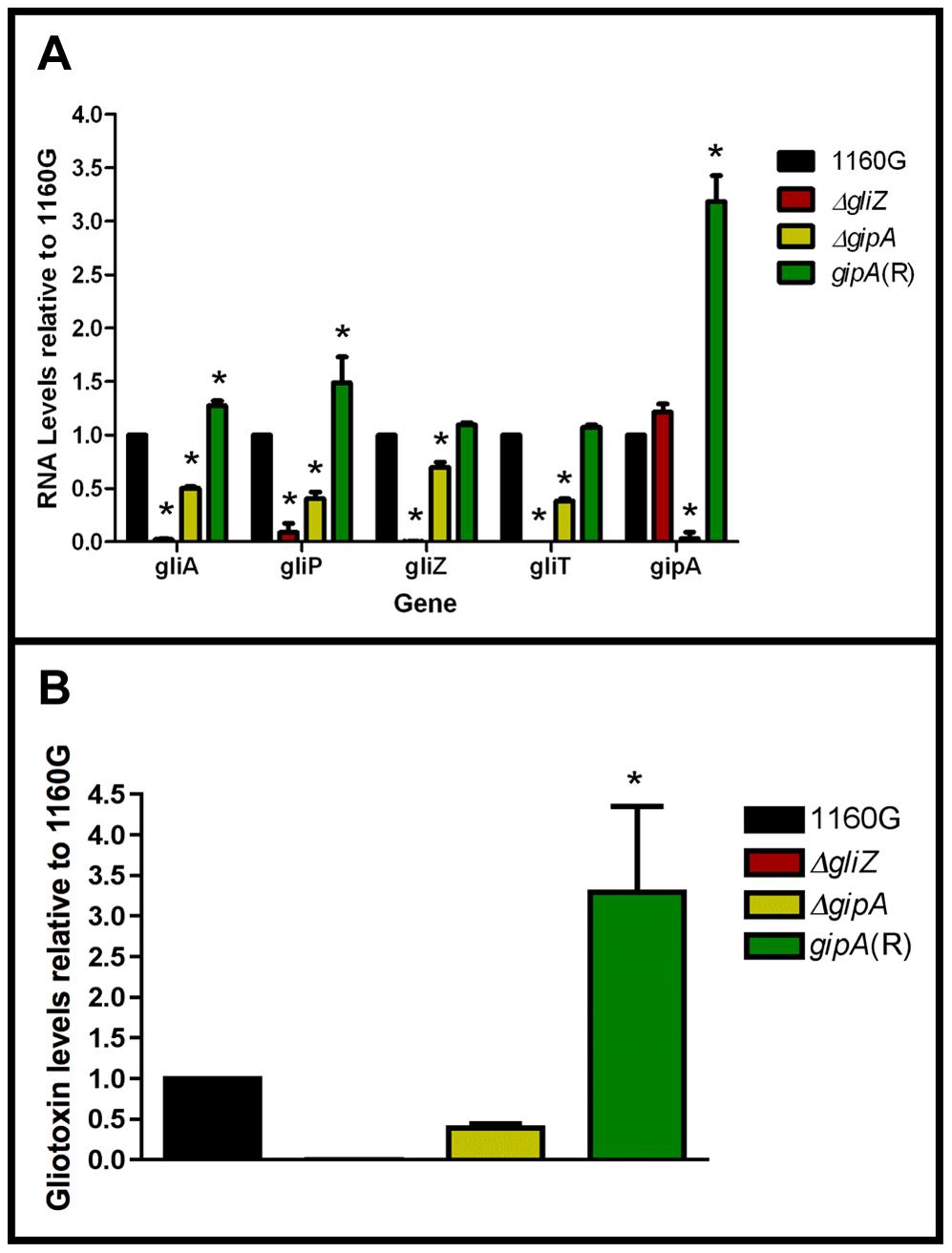 Loss of <i>gipA</i> negatively affects gliotoxin production.