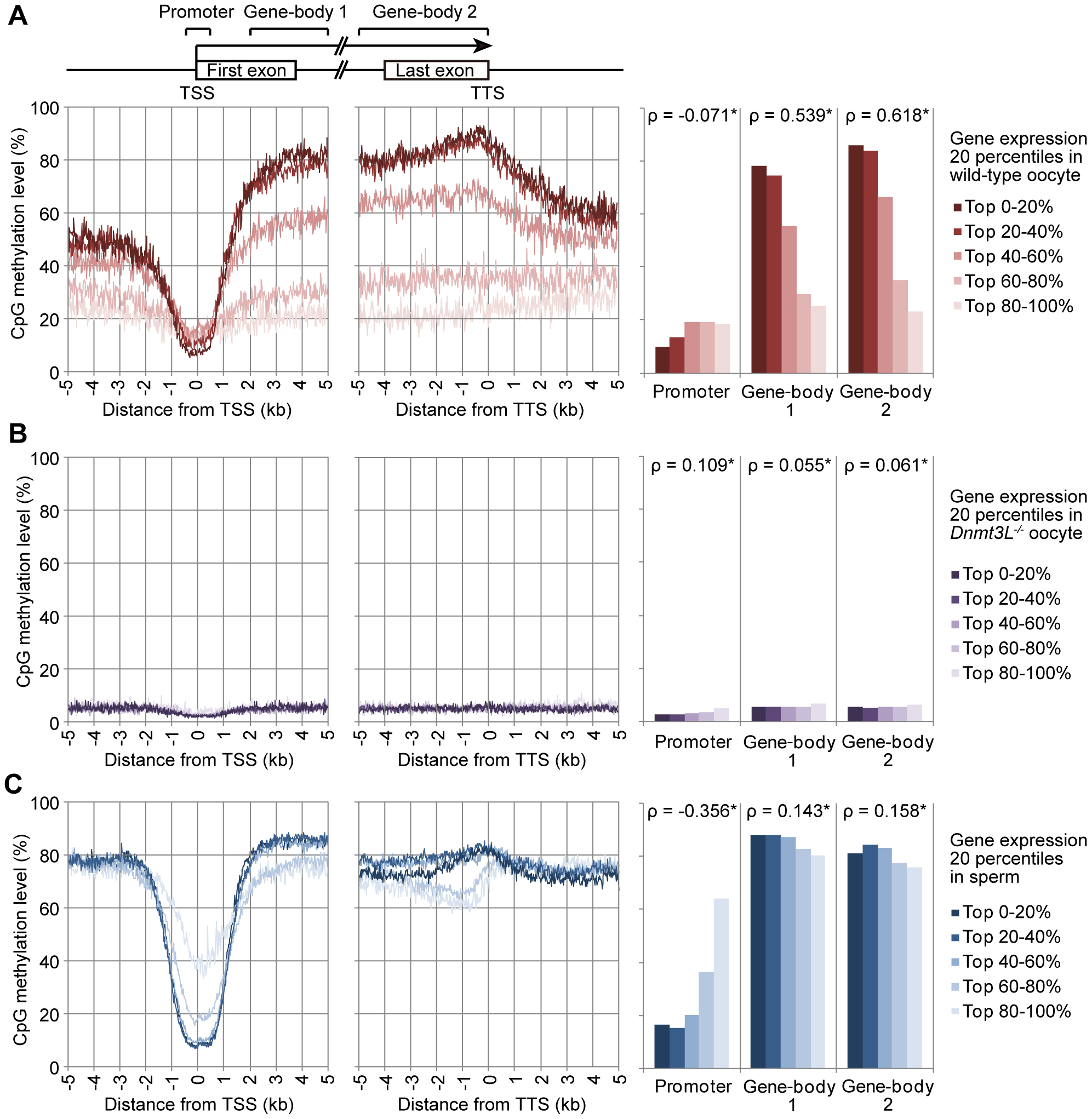 Relationship between gene expression and methylation in promoter and gene-body regions in mouse germ cells.