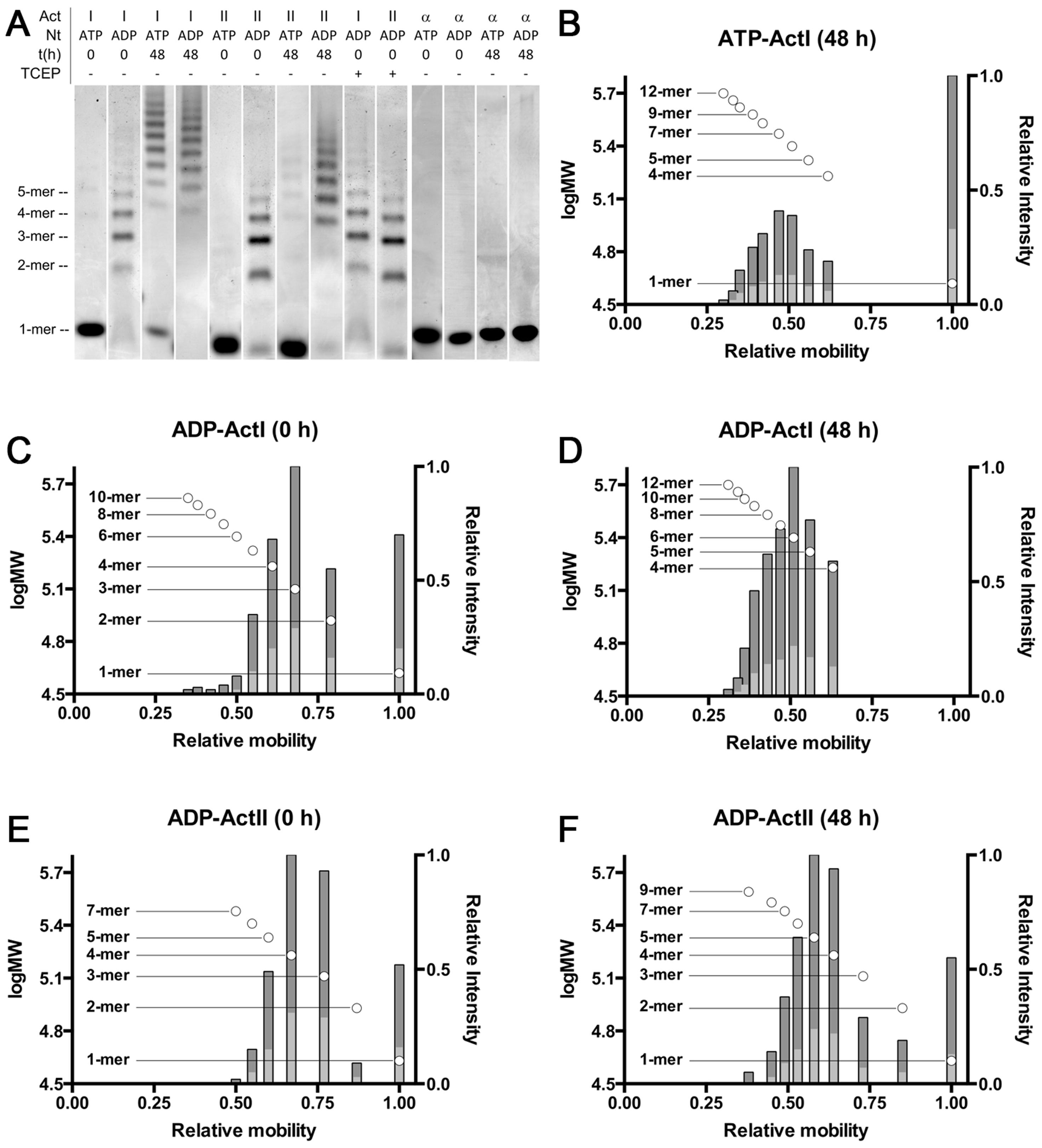 Native PAGE analysis of the <i>Plasmodium</i> actins and α-actin.