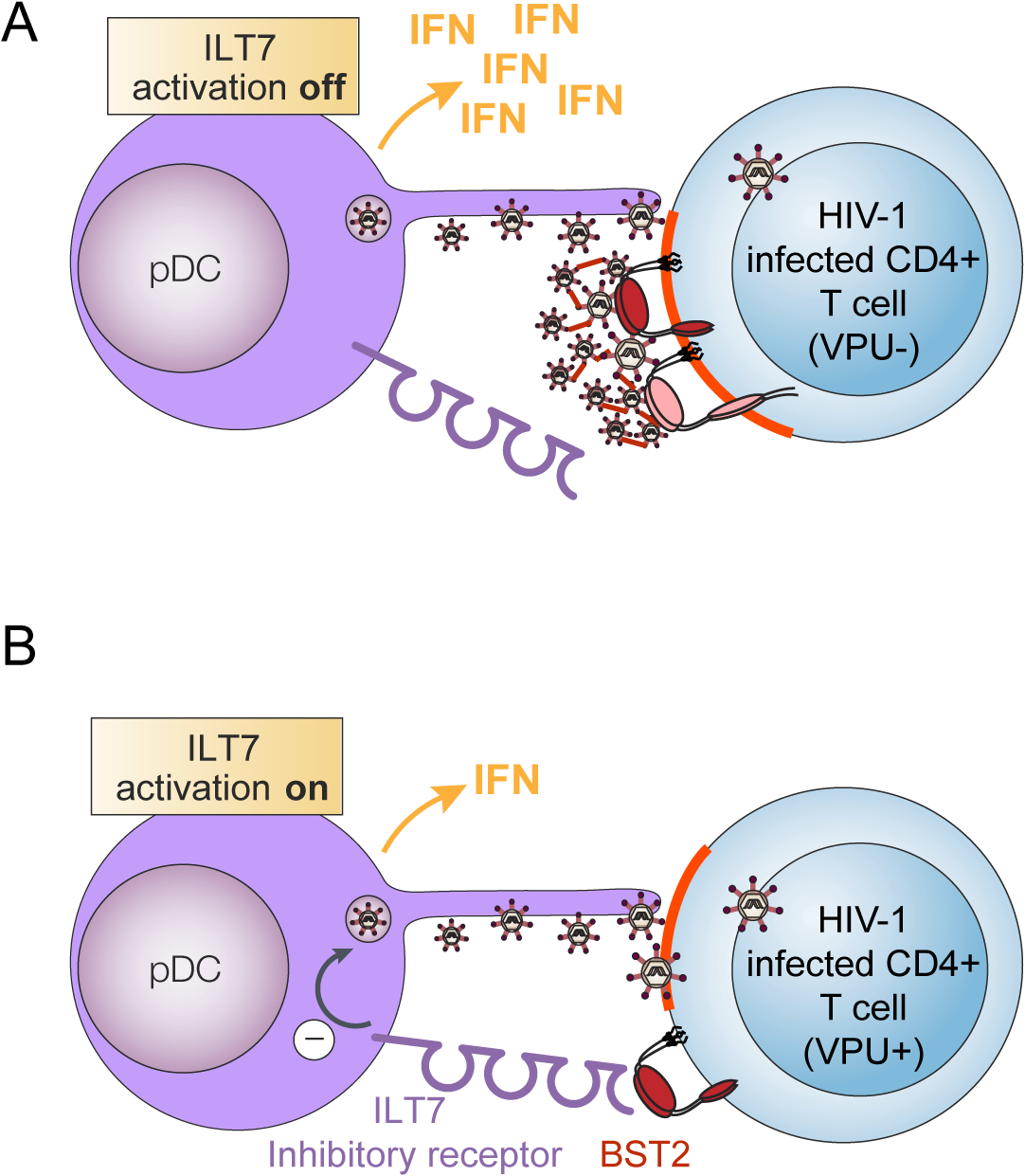 Presence of Vpu in HIV-infected cells limits pDC antiviral responses upon sensing of infected cells.