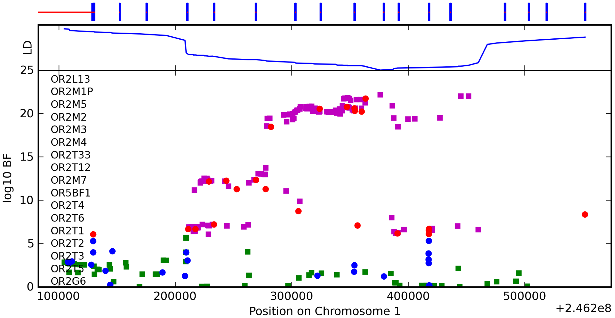 Bayes factors for genotyped and imputed SNPs for asparagus anosmia around <i>OR2M7</i>.
