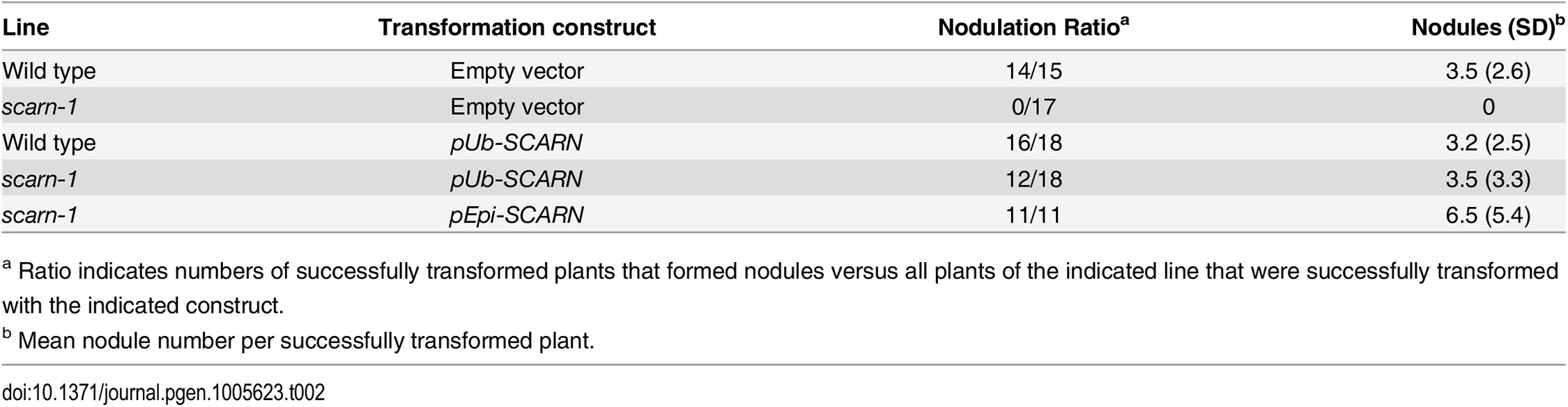 Complementation of <i>scarn-1</i> nodulation phenotype by hairy root transformation.