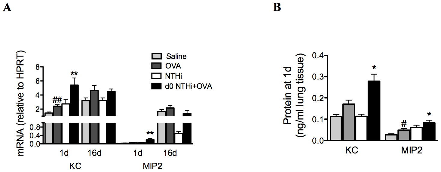 Early neutrophil influx is associated with enhanced neutrophil chemokine expression.