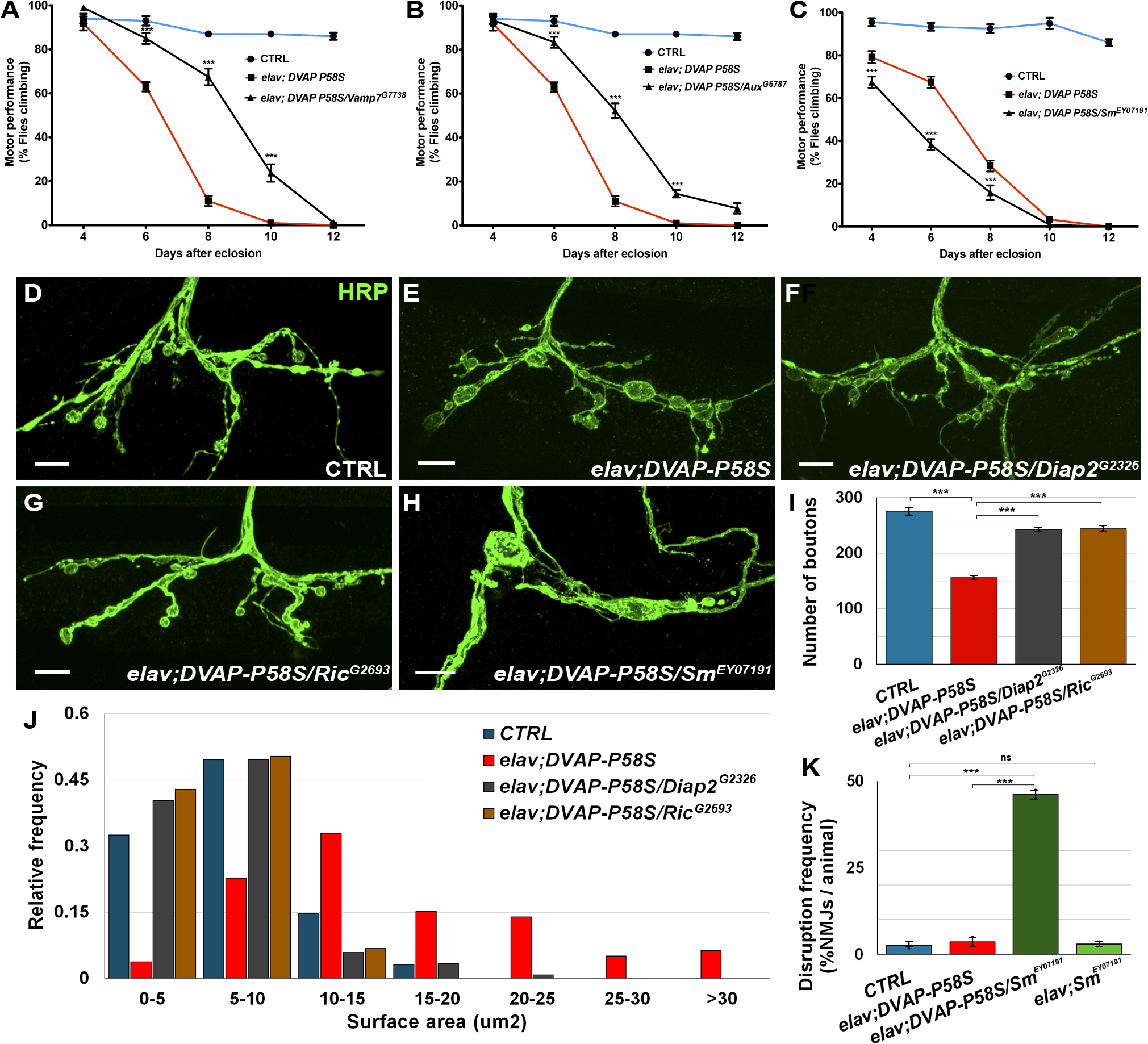 Effect of a subset of modifiers on motor and synaptic structure abnormalities associated with the expression of <i>DVAP-P58S</i> in neurons.