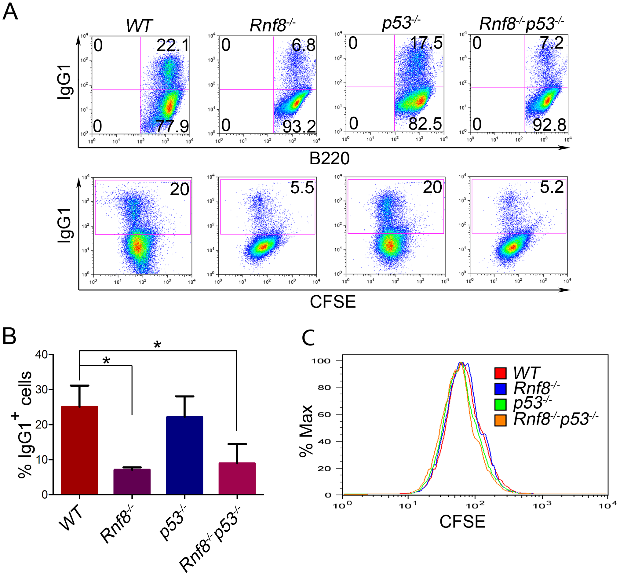 Loss of p53 does not rescue class switch recombination defects observed in <i>Rnf8<sup>−/−</sup></i> mice.