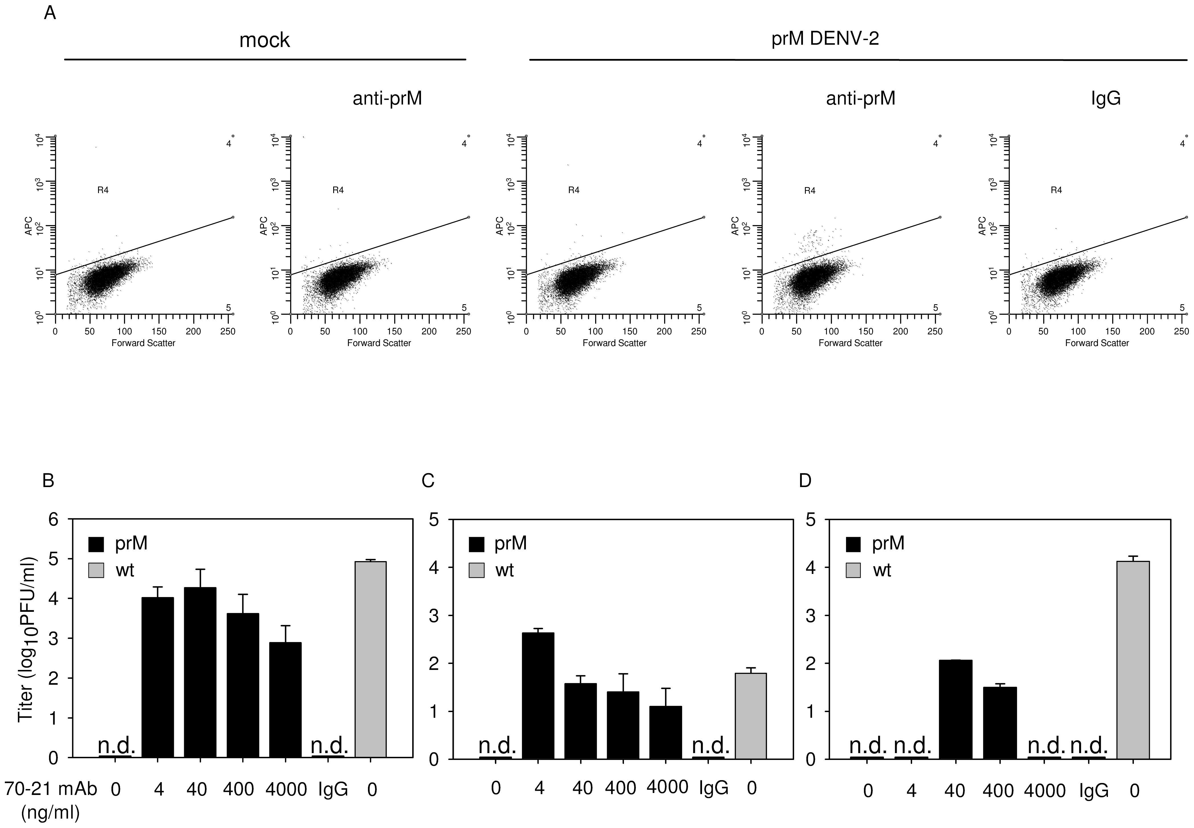 Immature DENV particles become highly infectious in the presence of anti-prM antibodies.