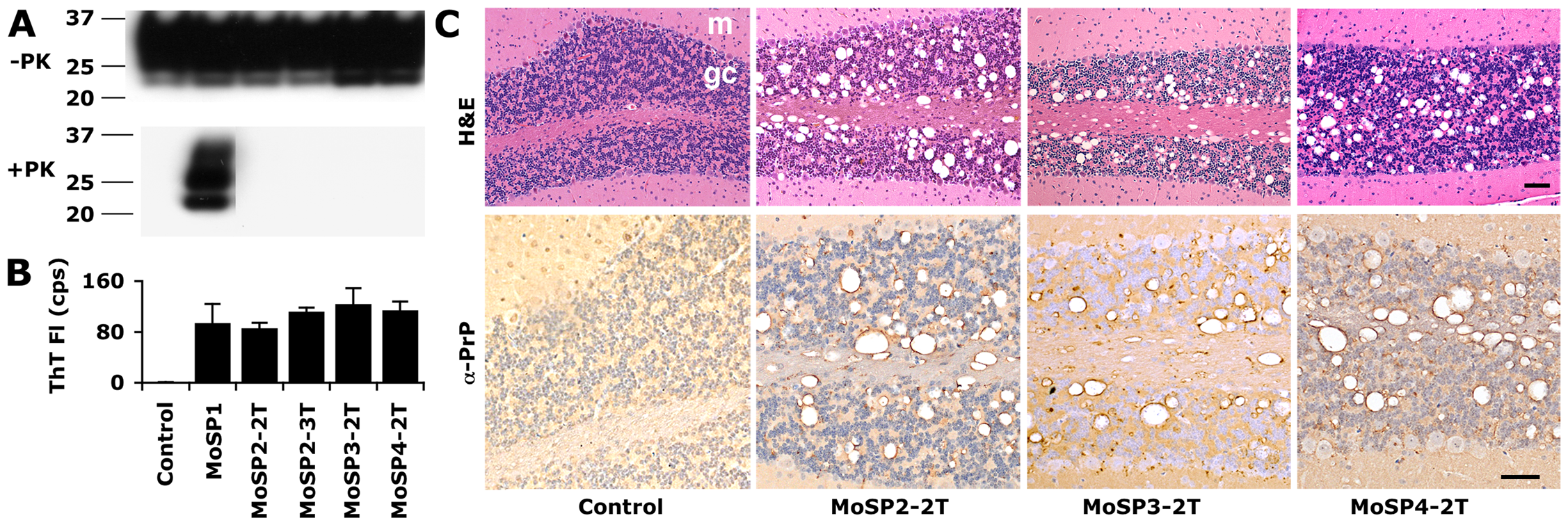 Protease-sensitive synthetic prions are serially transmissible in Tg9949 mice.
