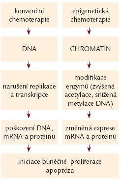 Rozdíl v účinku konvenčních a epigenetických cytostatik.