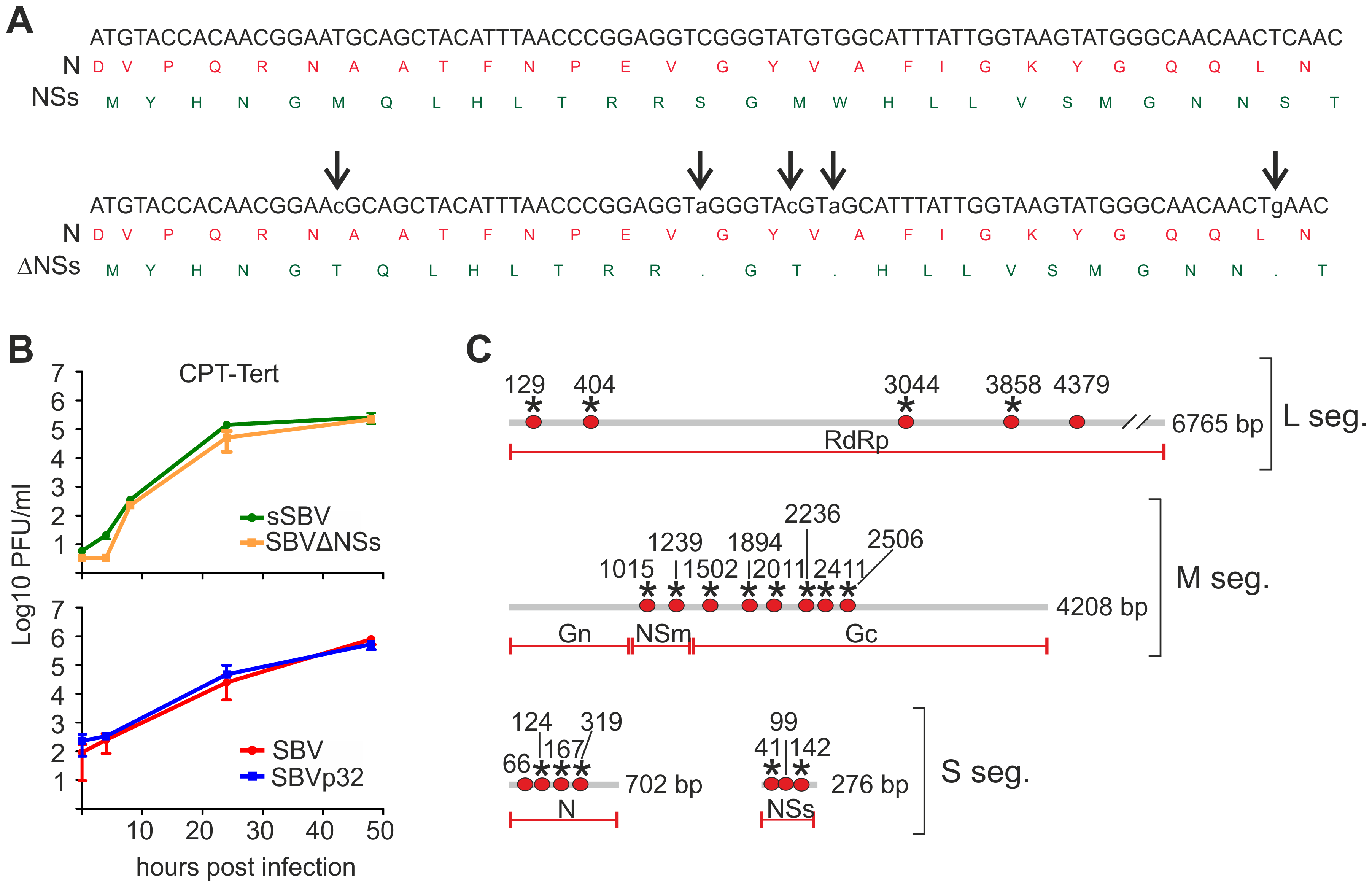 <i>In vitro</i> phenotypic characteristics of SBVΔNSs and SBVp32.