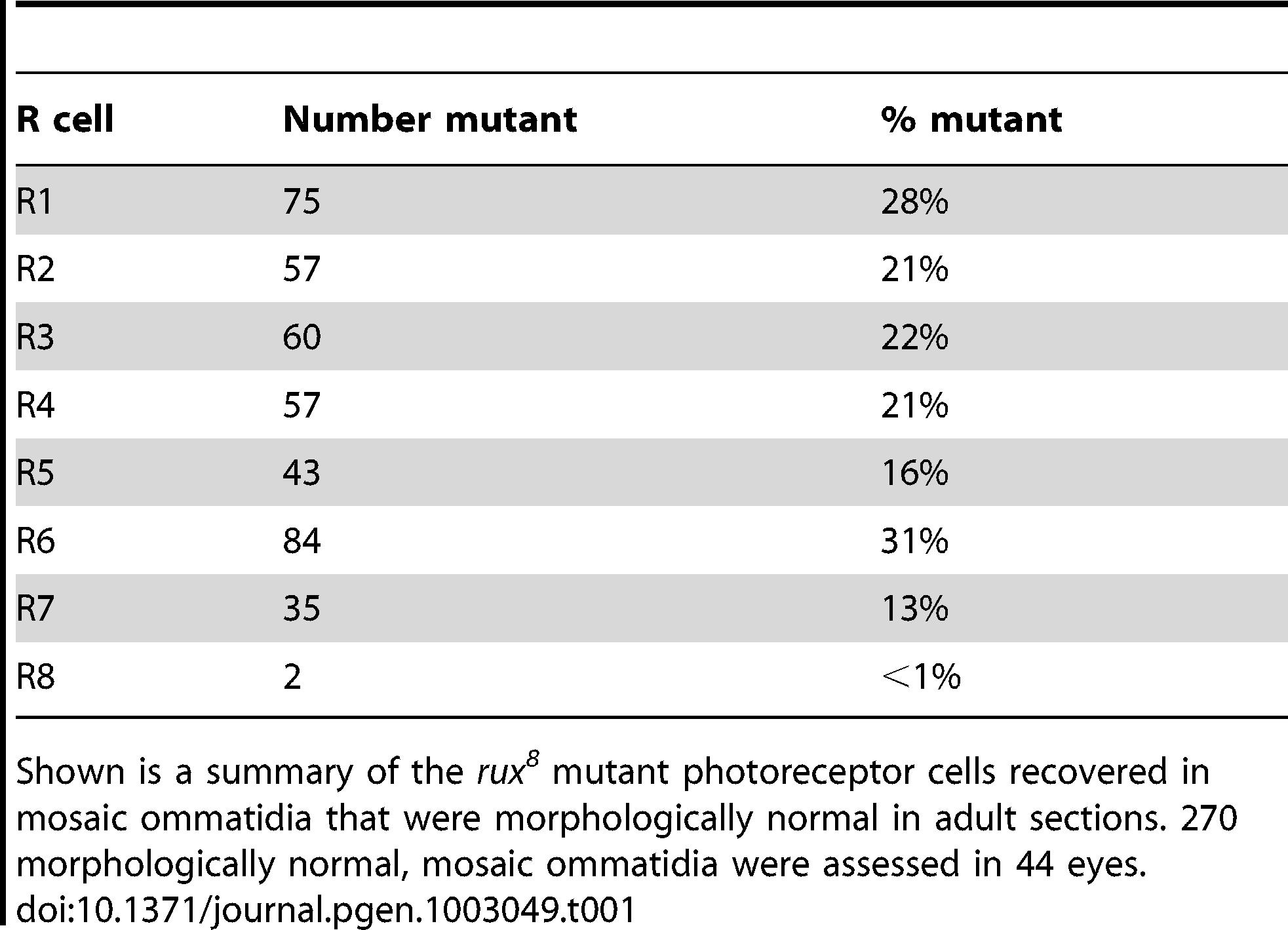 Analysis of adult retina mosaic for <i>rux<sup>8</sup></i>.
