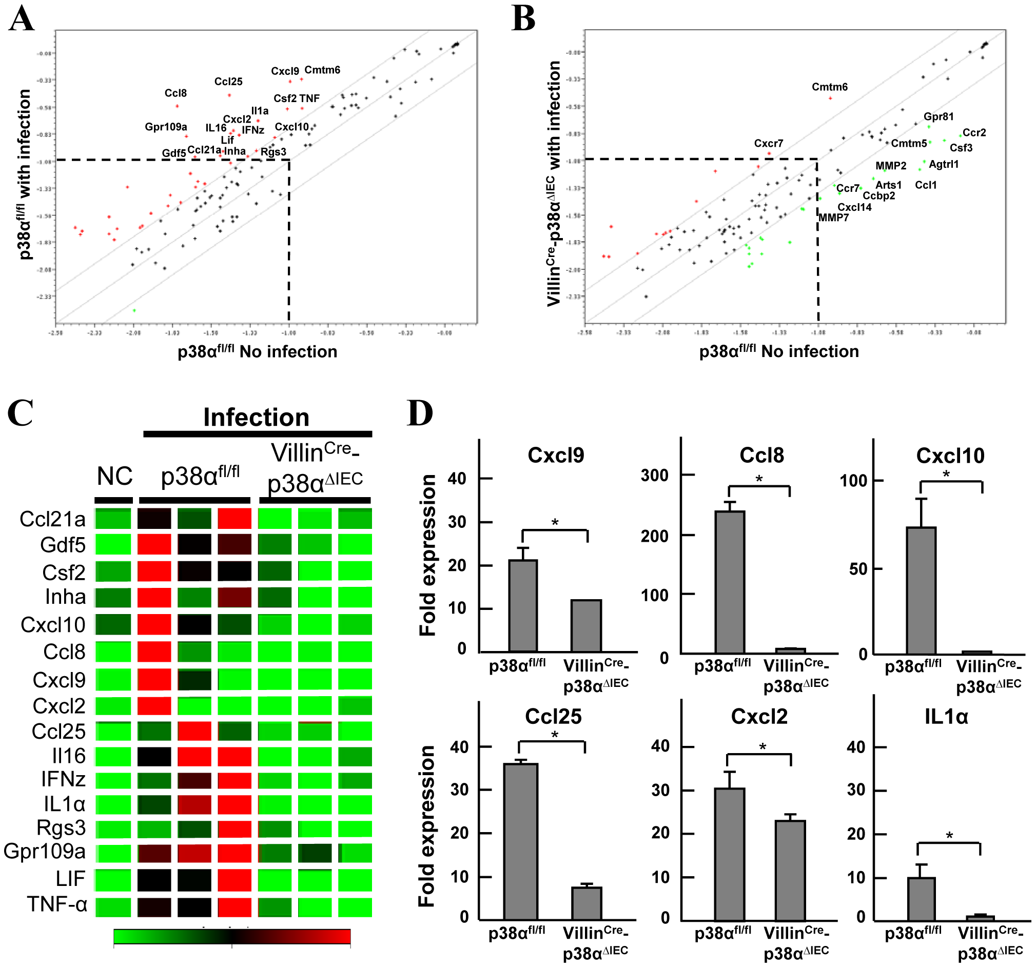 p38α in intestinal epithelial cells is required for chemokine expression to recruit immune cells into the colon mucosa after <i>C. rodentium</i> infection.
