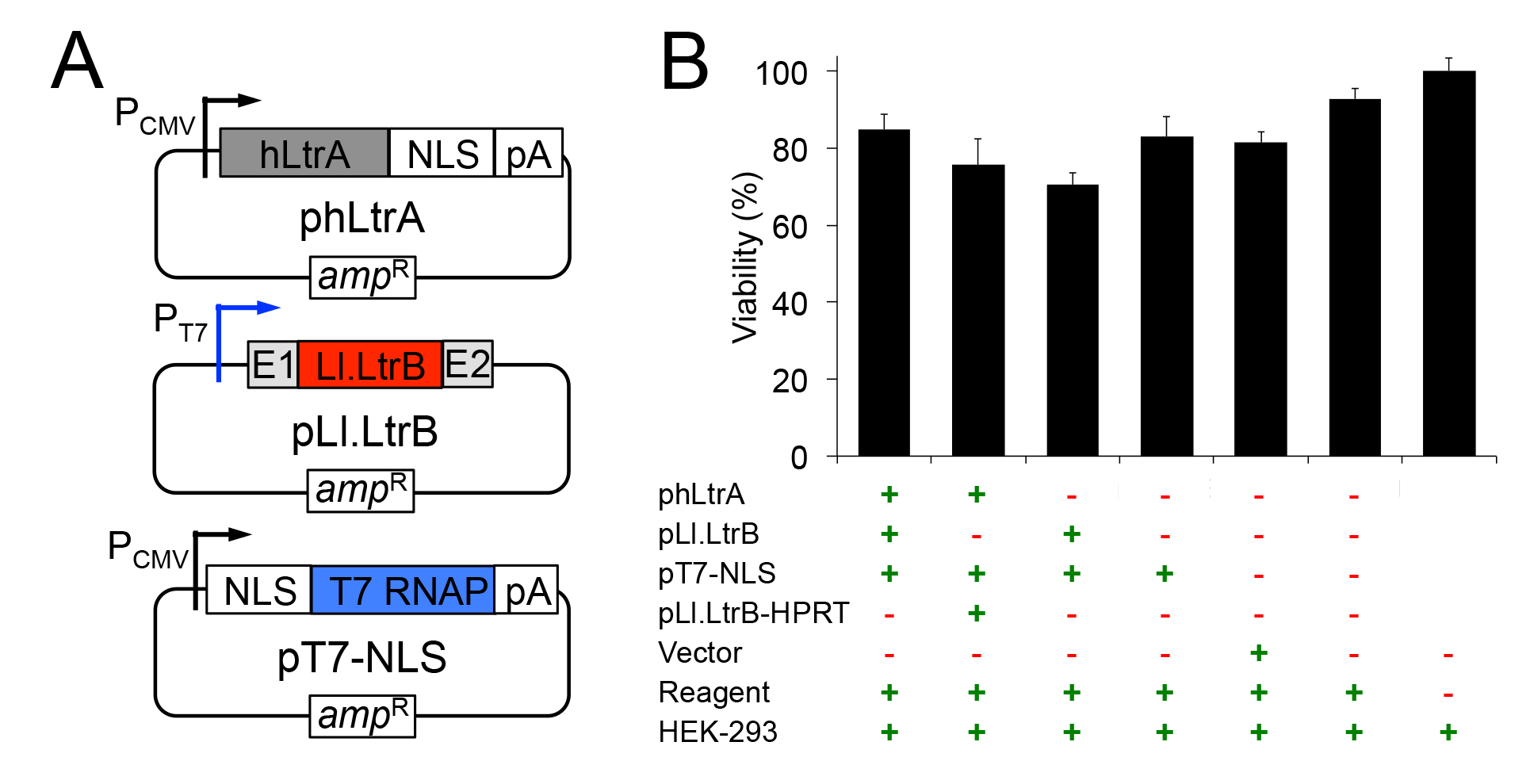 Plasmids used for expressing the mobile Ll.LtrB group II intron in human cells and their effect on cell viability.