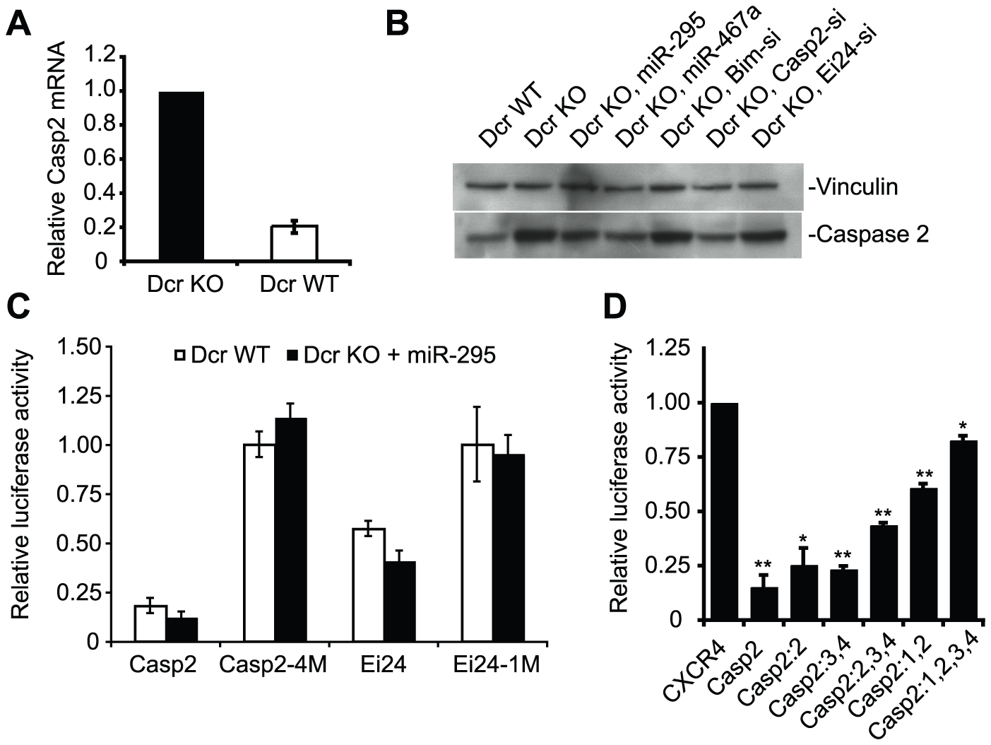 The pro-apoptotic genes Caspase 2 (Casp2) and Ei24 are direct targets of the mir-295 cluster.