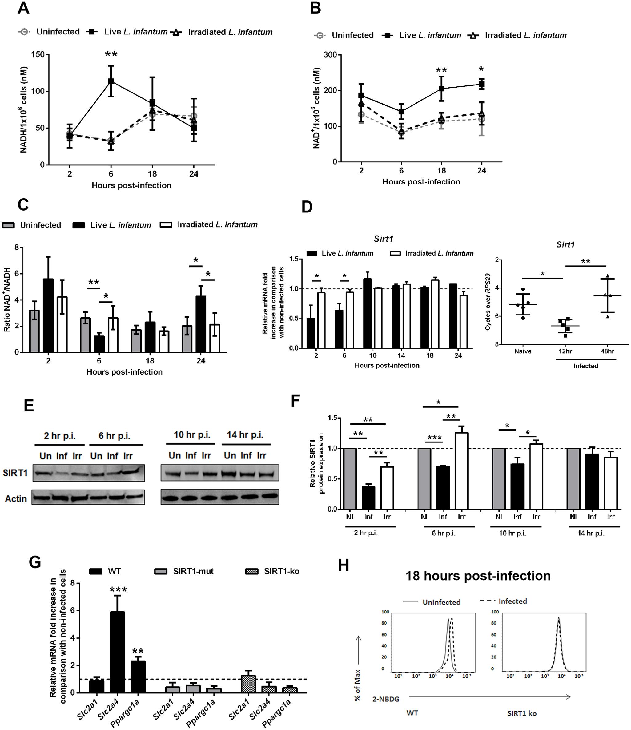 <i>L. infantum</i> modulates SIRT1 activity through redox state alteration.