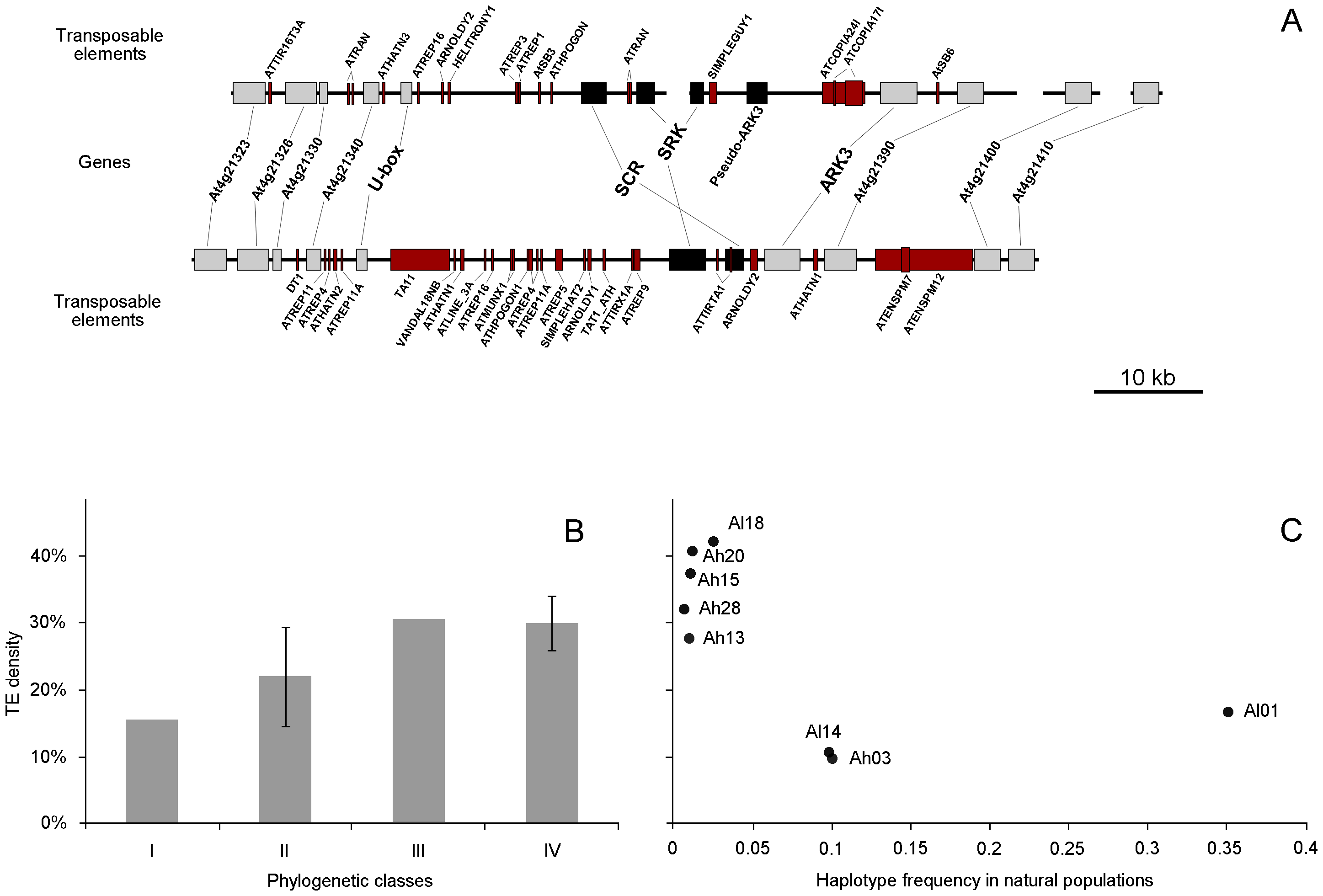 Comparative annotation of genes and transposable elements, mean TE density, and TE density according to frequency.